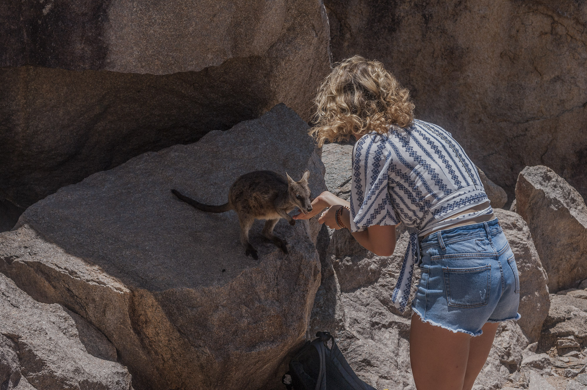 feeding rock wallabies magnetic island geoffrey bay