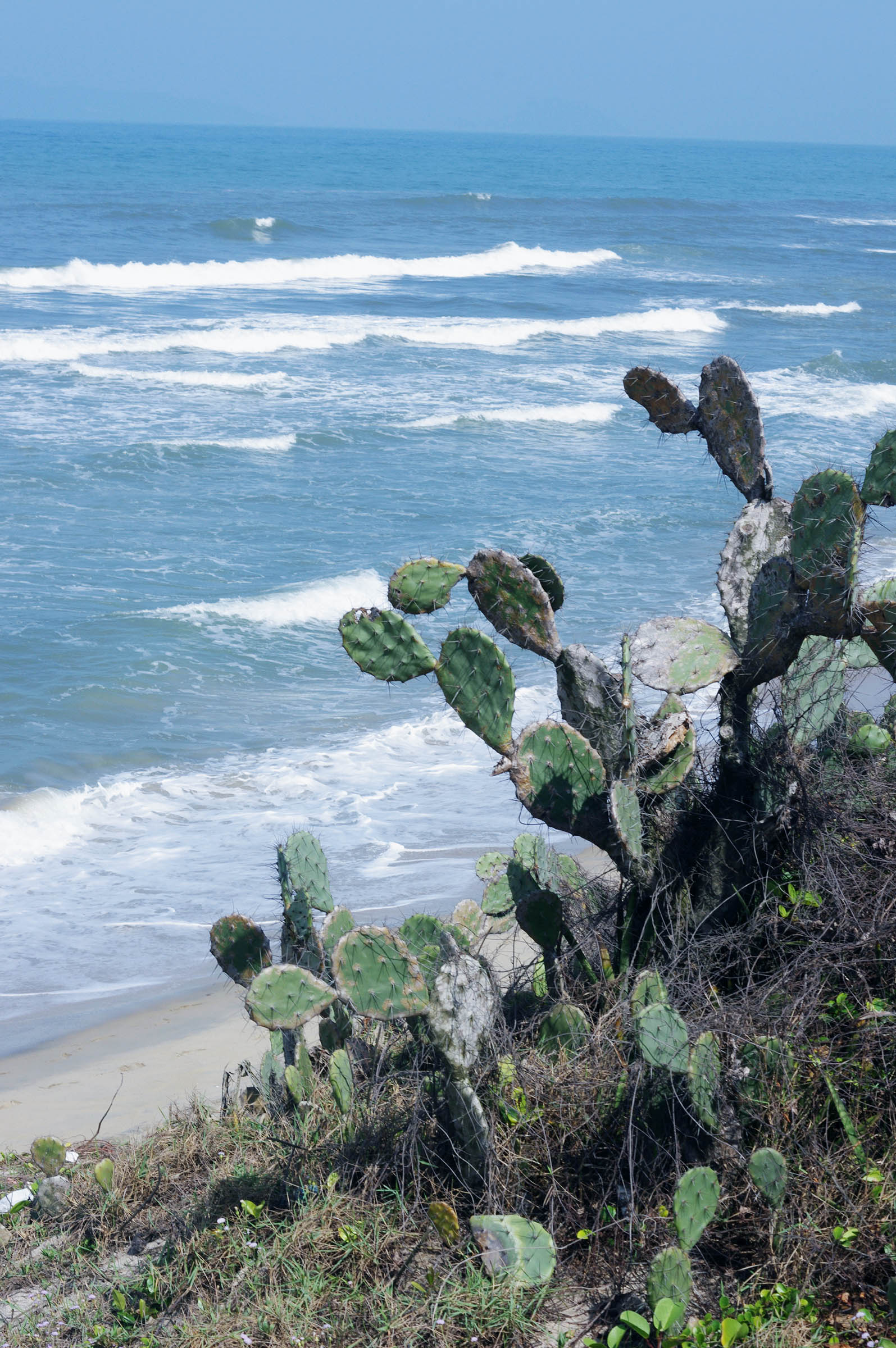 Cactus on the beach
