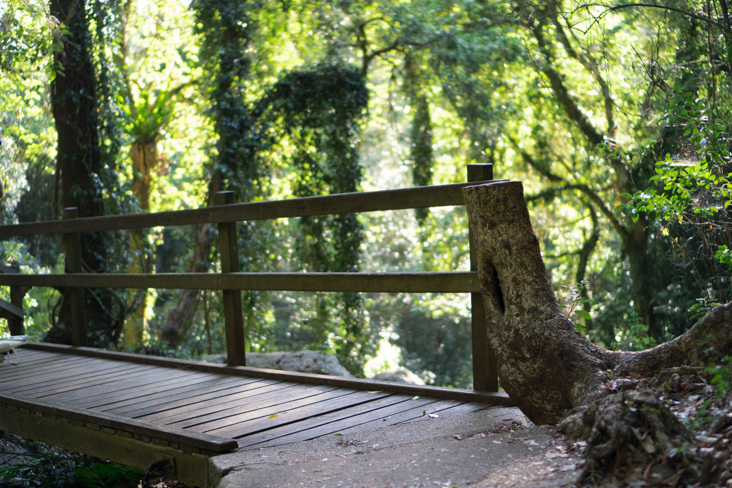 Bridge in Bunya Mountains