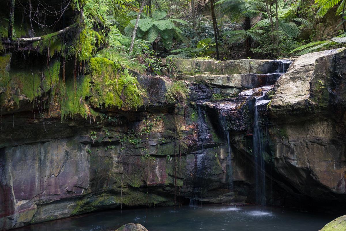 Moss Garden, Carnarvon Gorge National Park