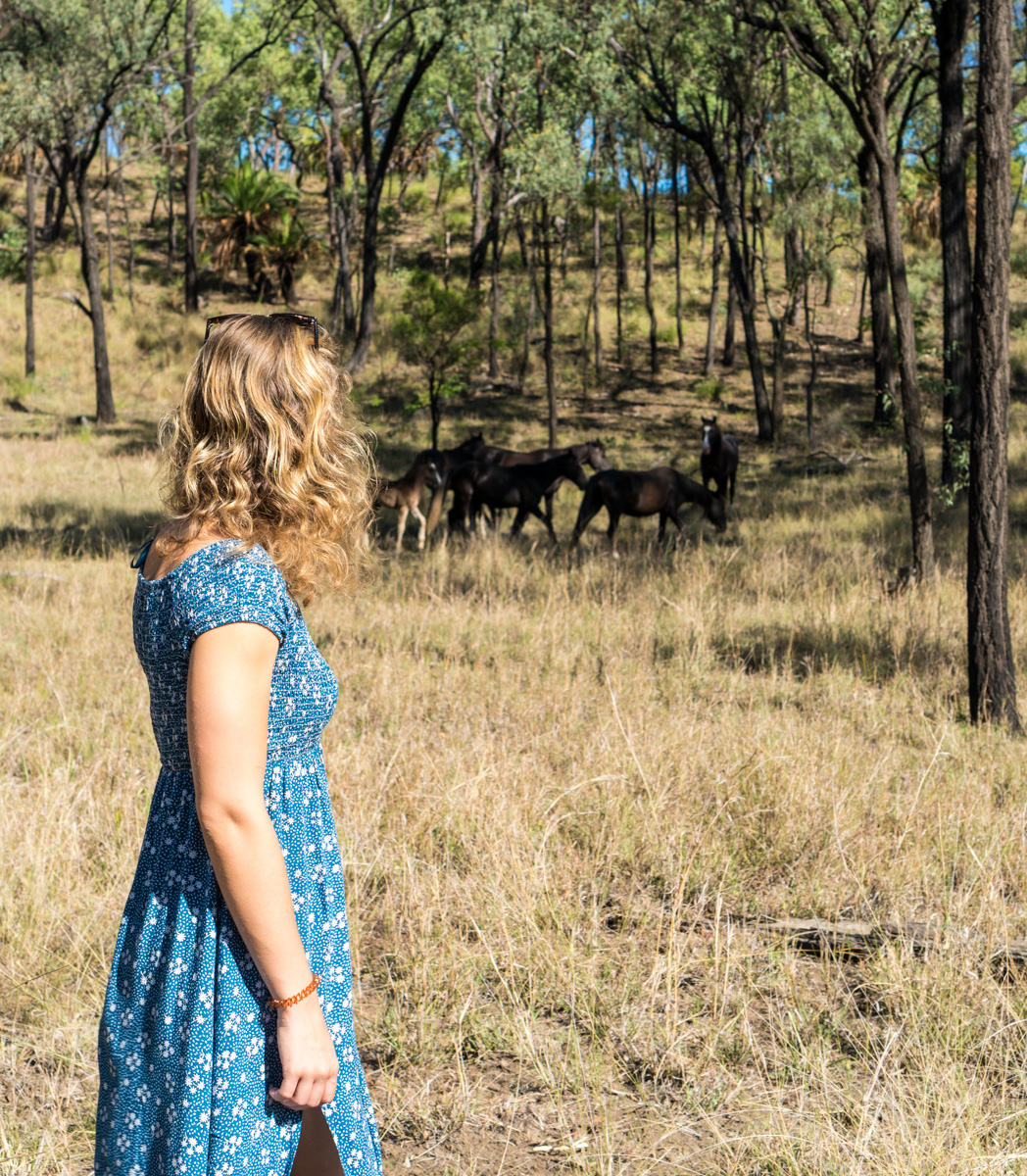 Wild horses at Carnarvon Gorge