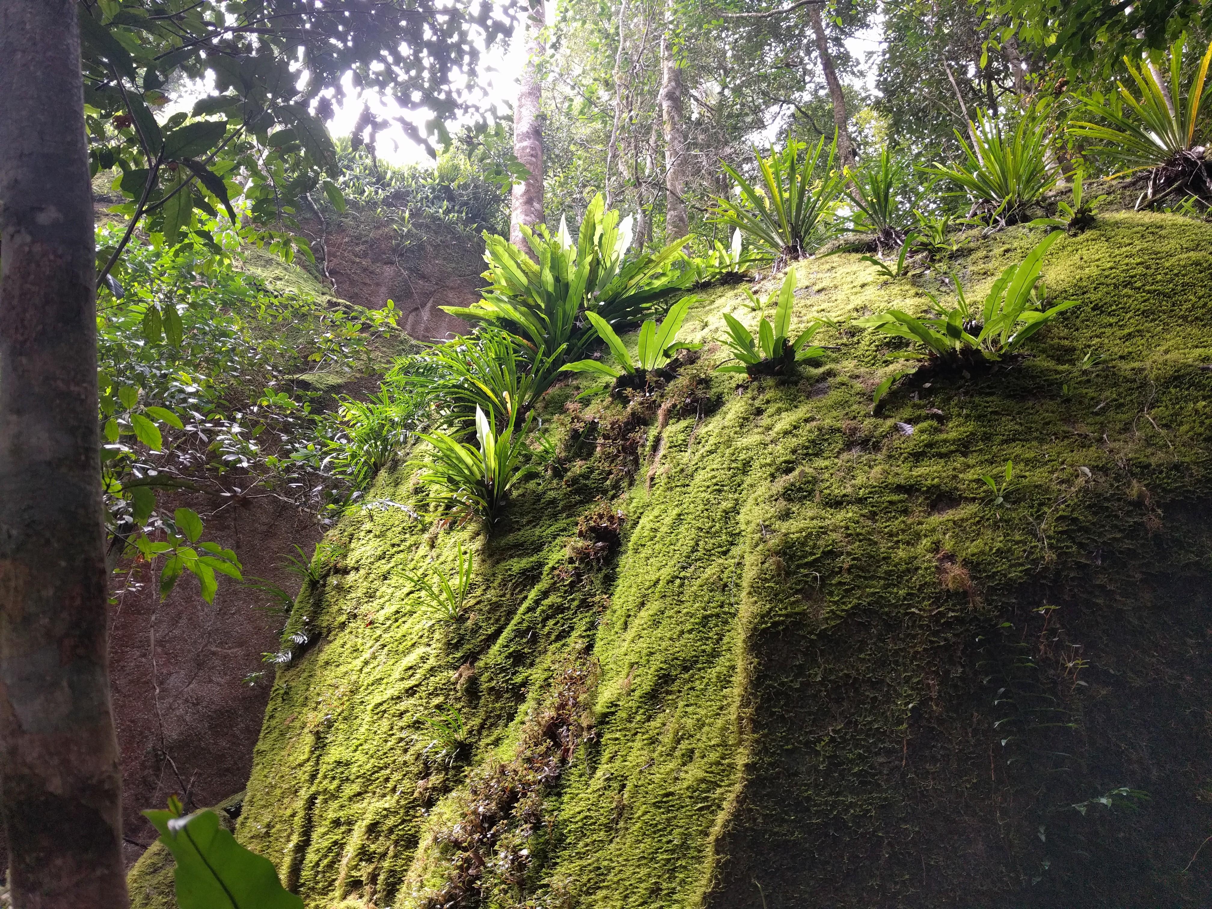 Torsten's Rock Garden, Paluma