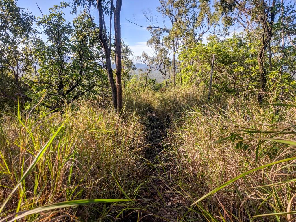 Mt Margaret walking track