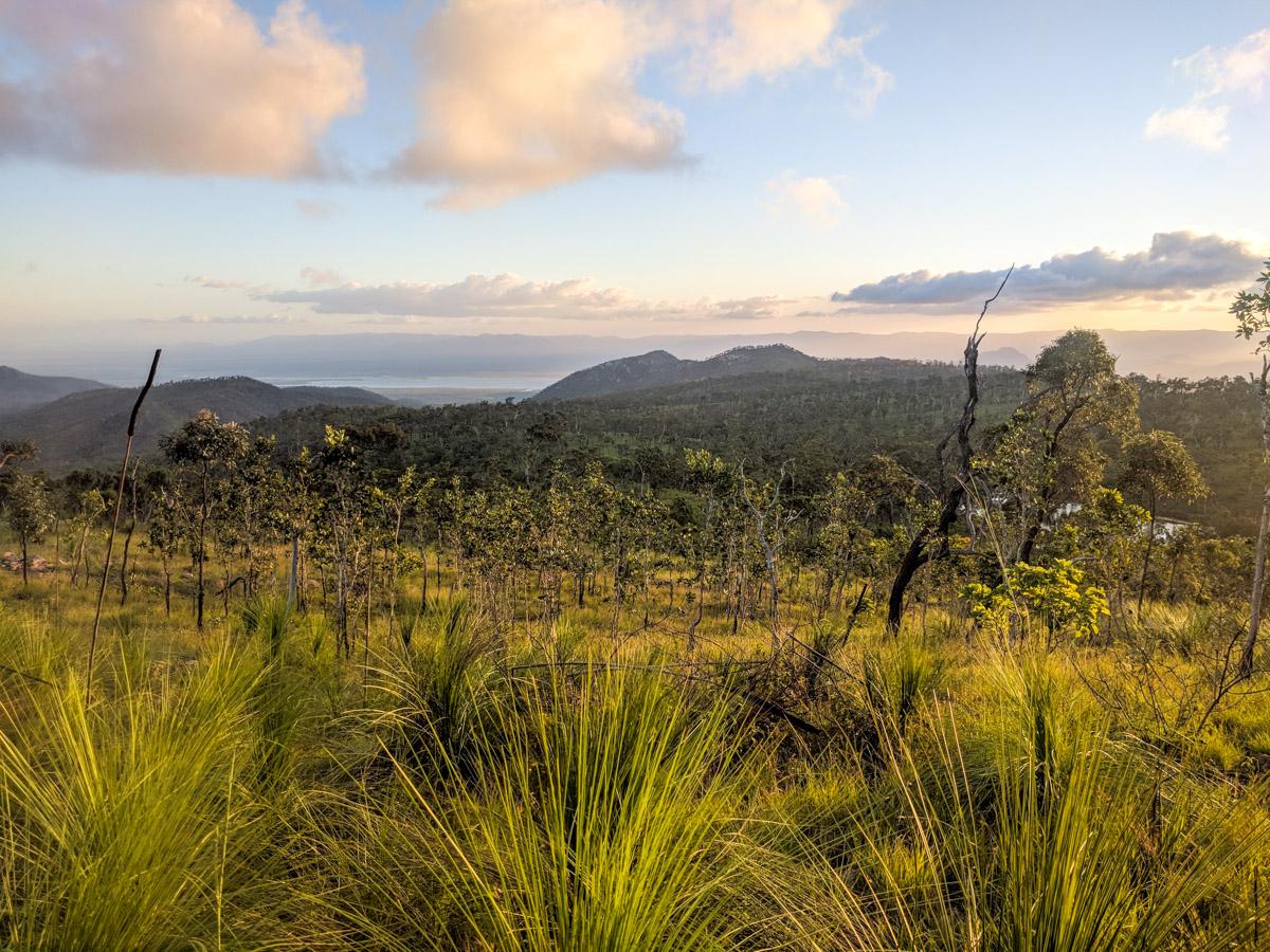 Mt Stuart vegetation