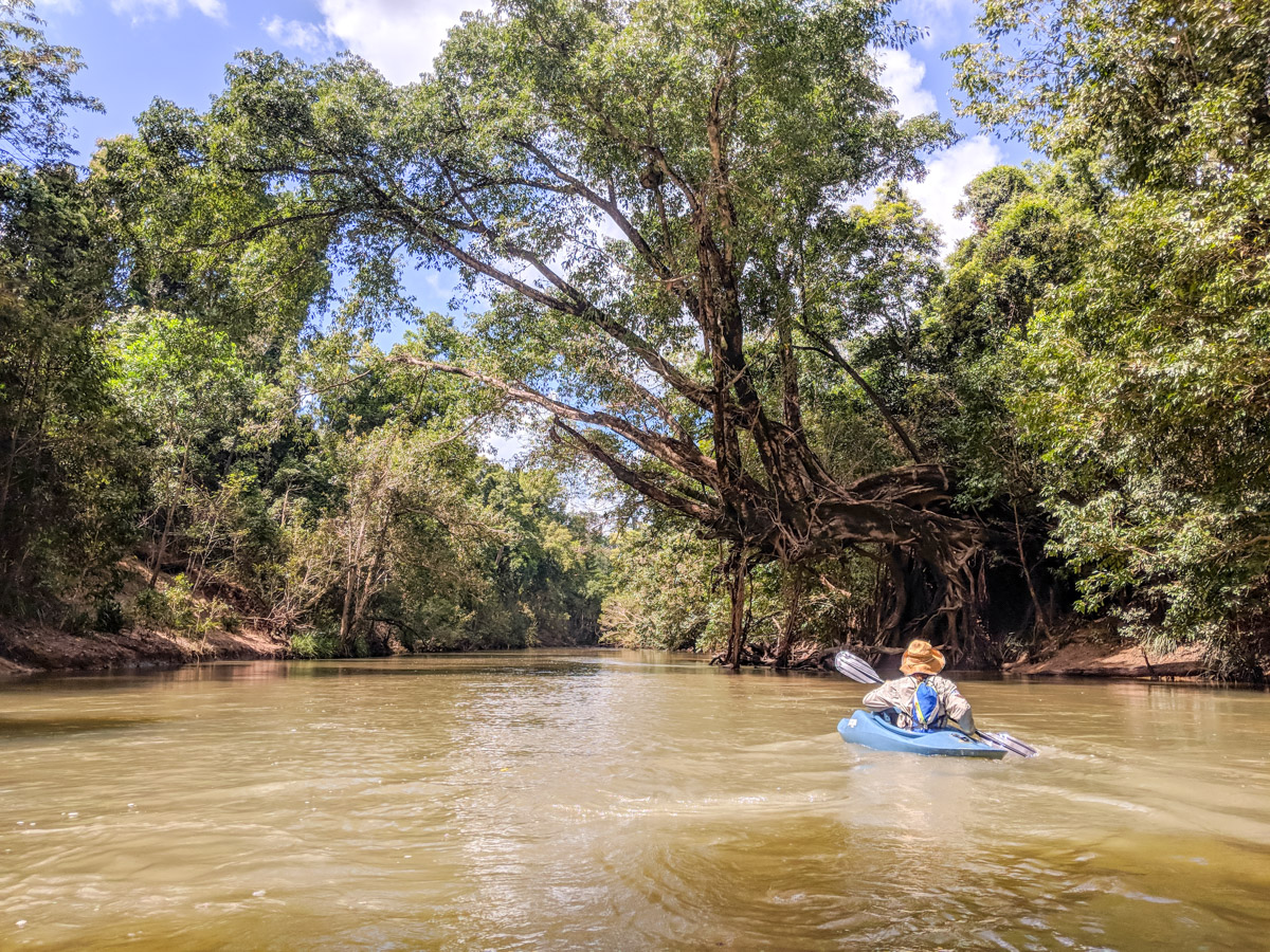 Kayaking down Broadwater Creek, Abergowrie State Forest, Queensland, Australia