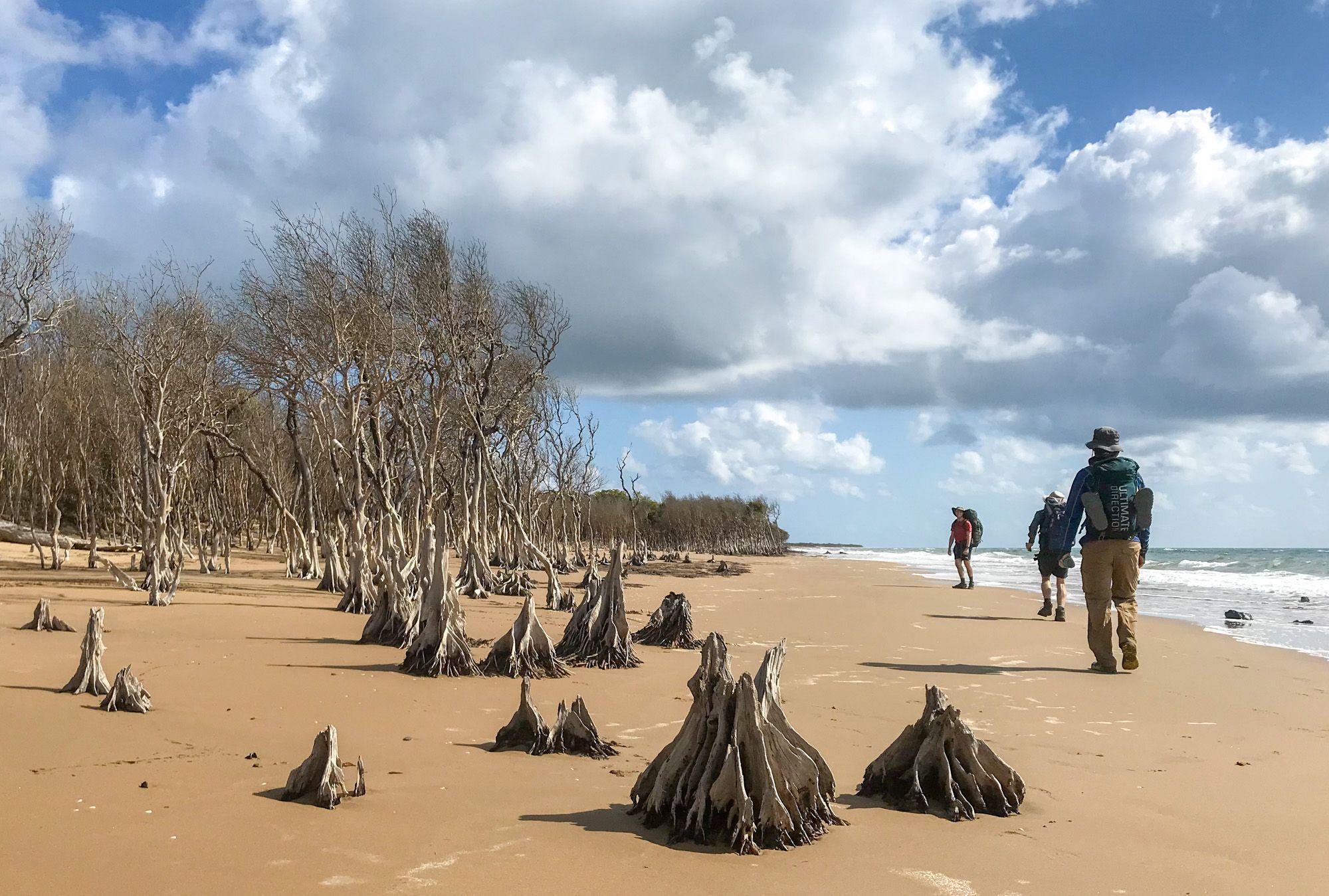 beach hike mangroves