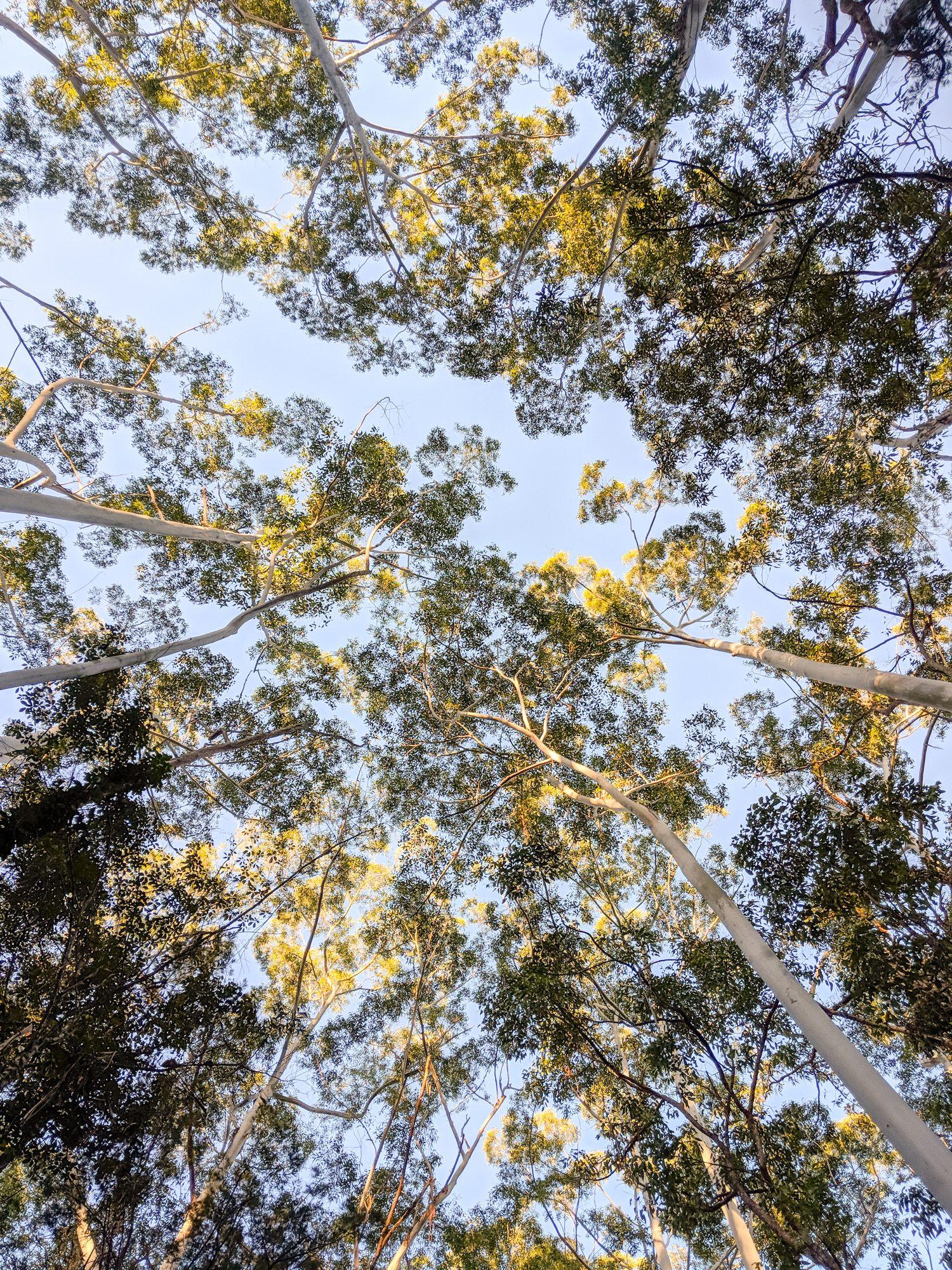 benham track gumtrees
