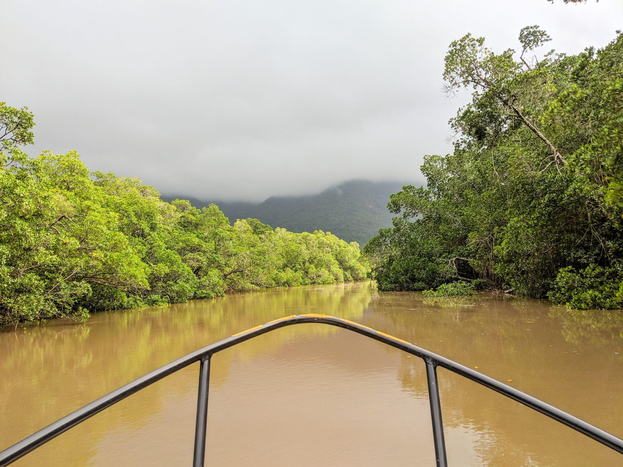 creek mangroves