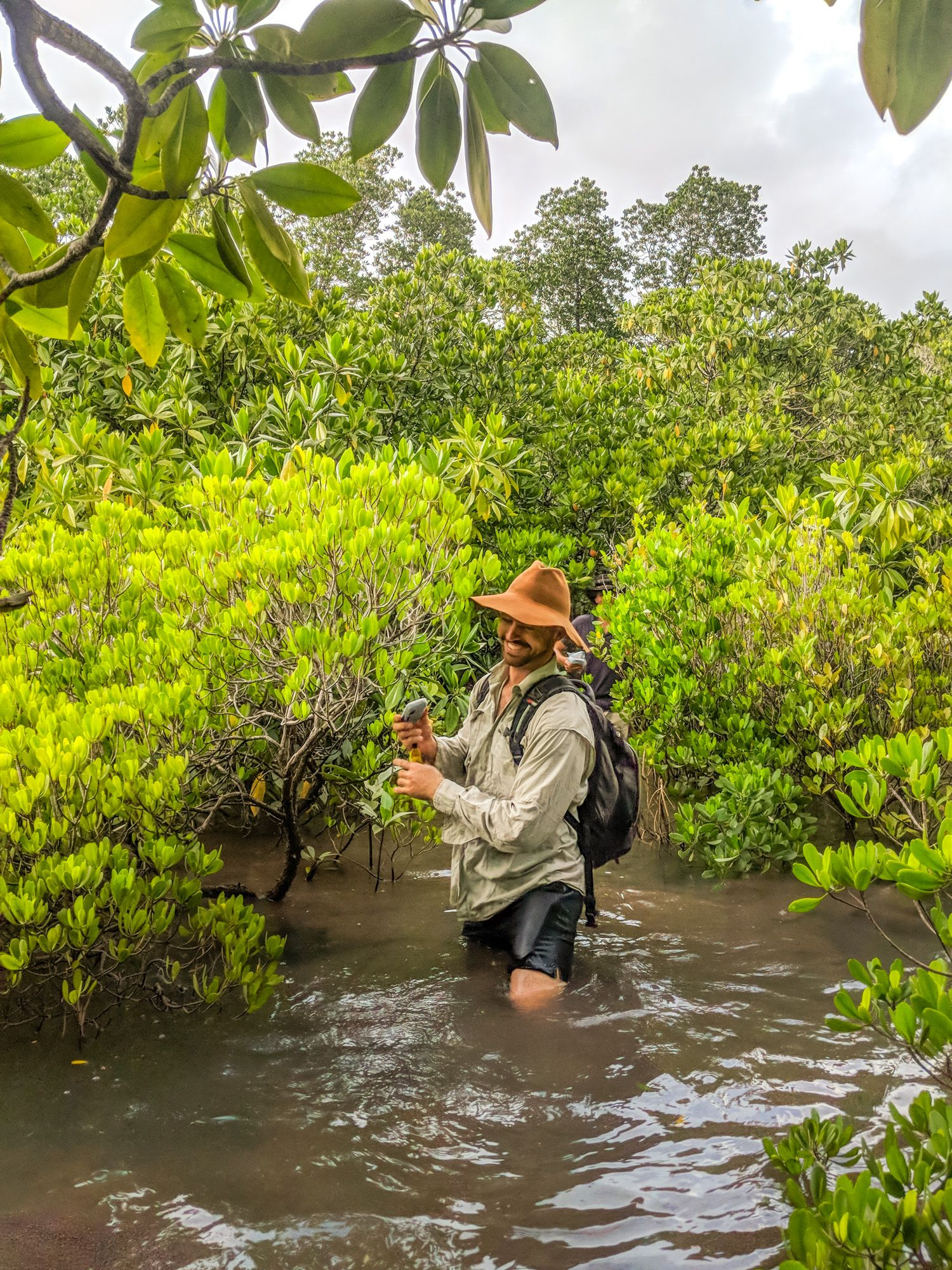 mangroves hike max gillham