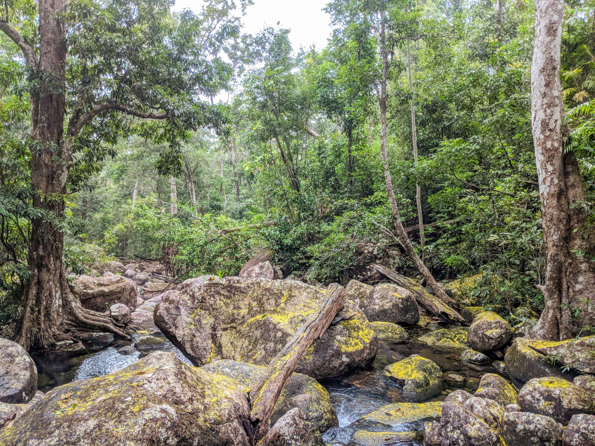 mt straloch creek yellow lichen