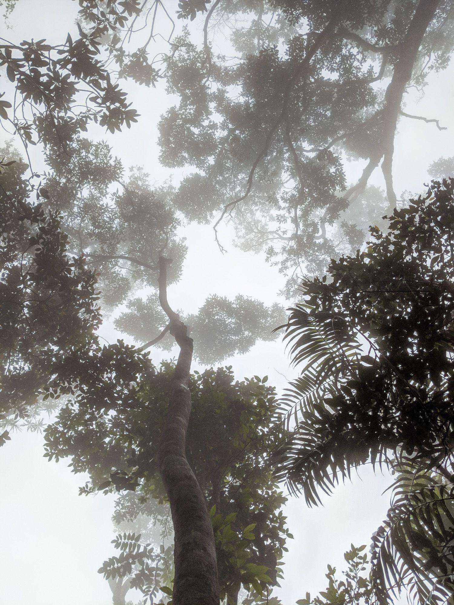 mt straloch mist canopy