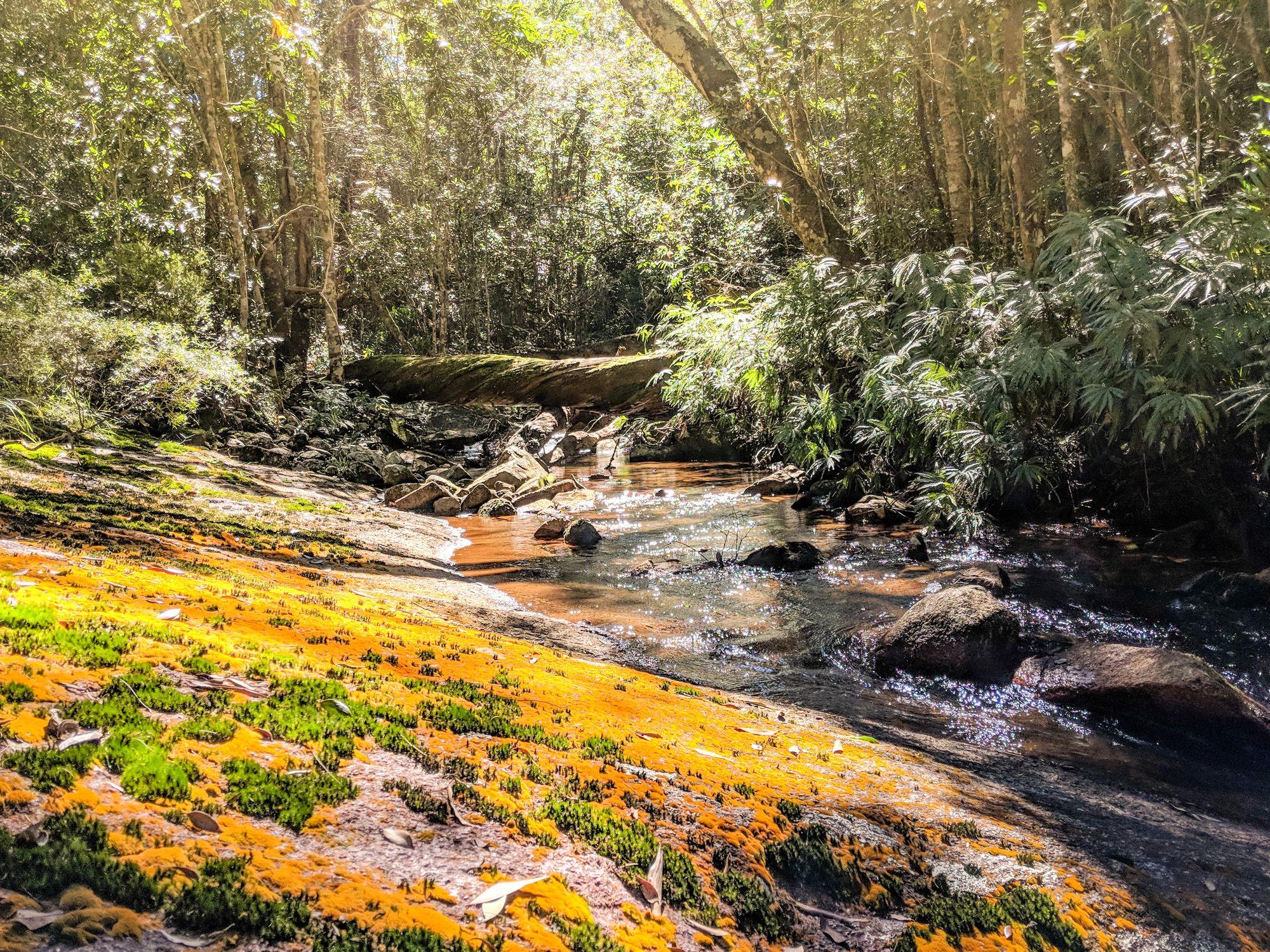 orange moss prospector hermit creek paluma