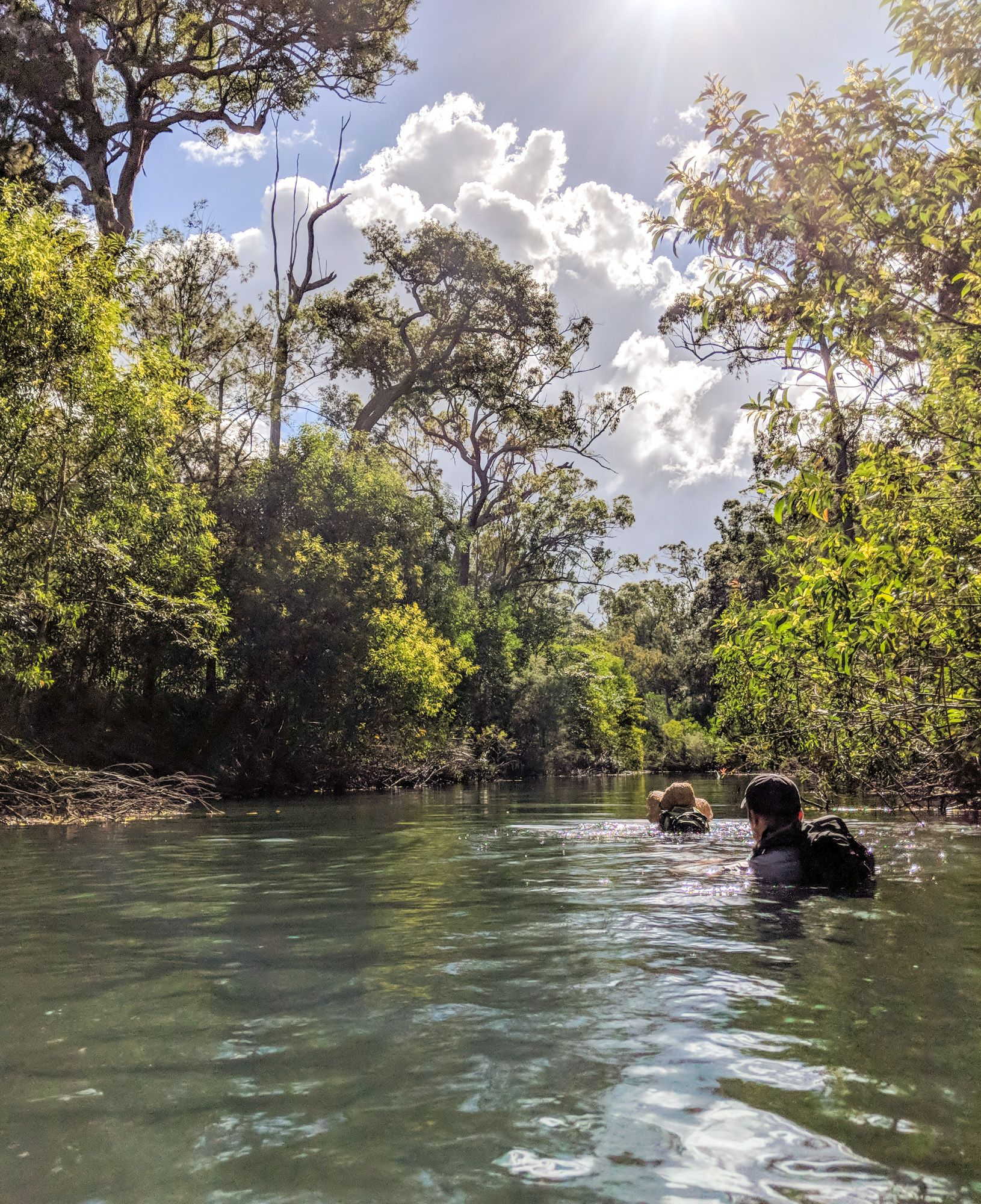 swimming hermit creek paluma