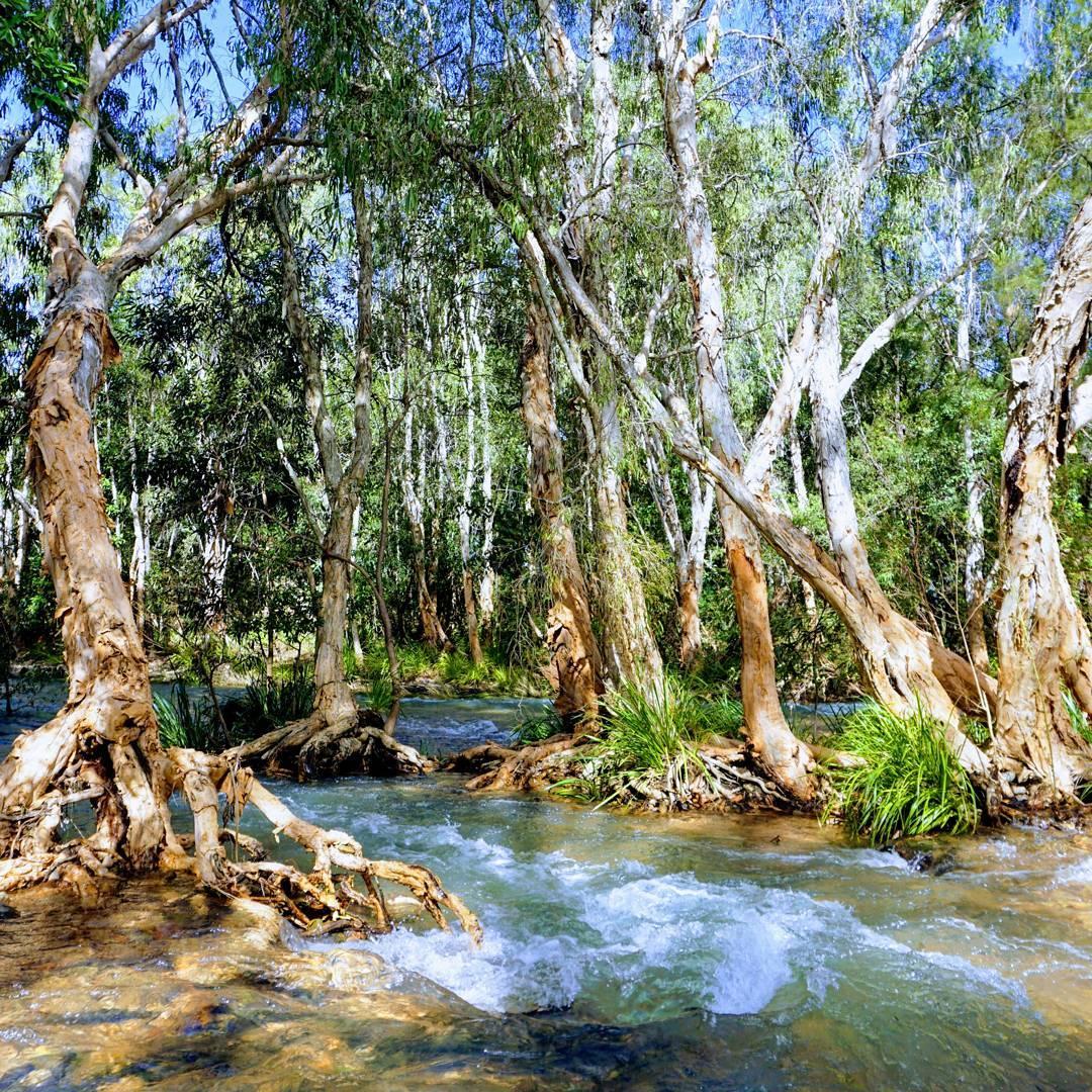 rollingstone creek