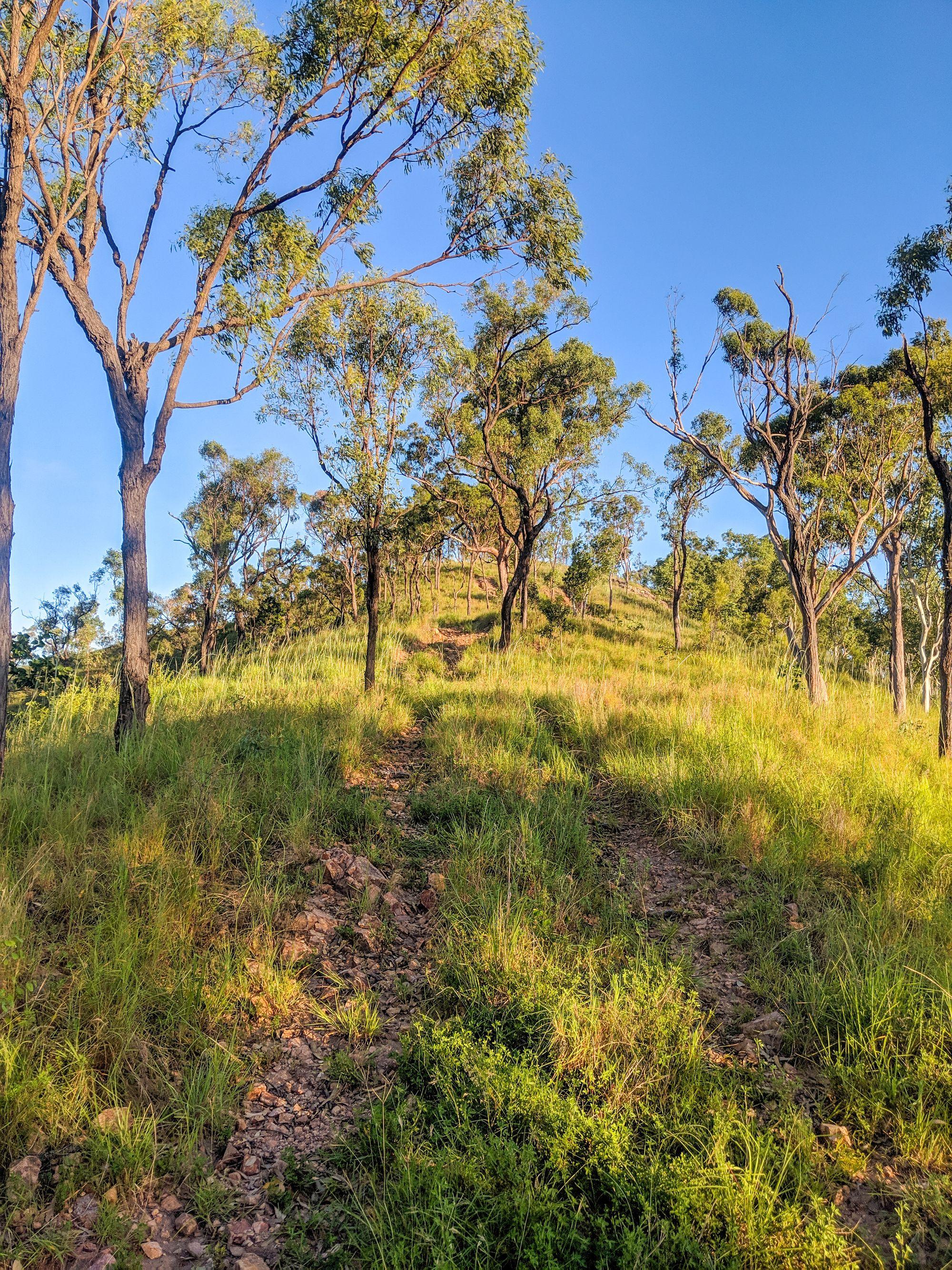 Wulguru Hills overgrown tracks