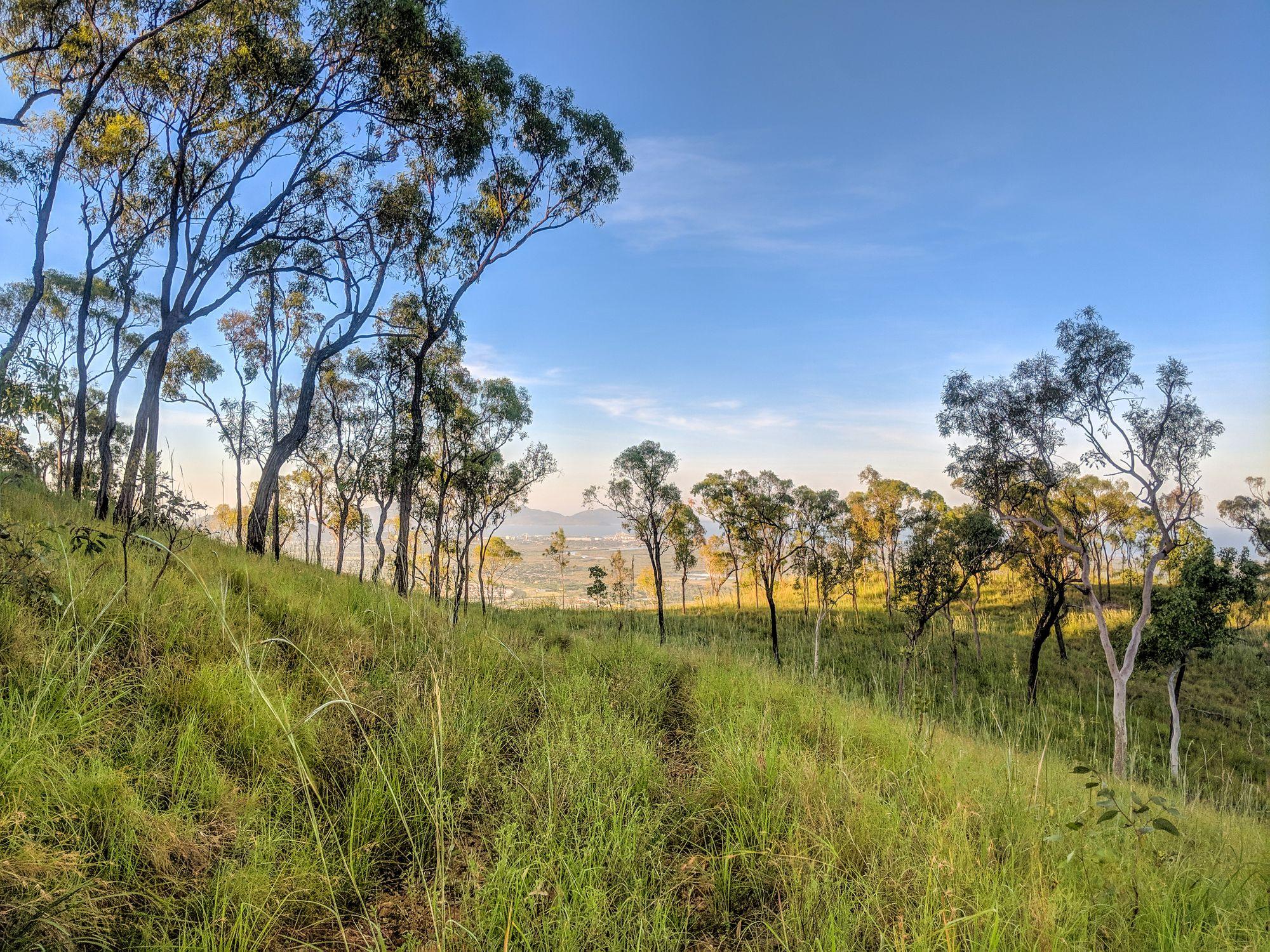 Wulguru Hills trails 1