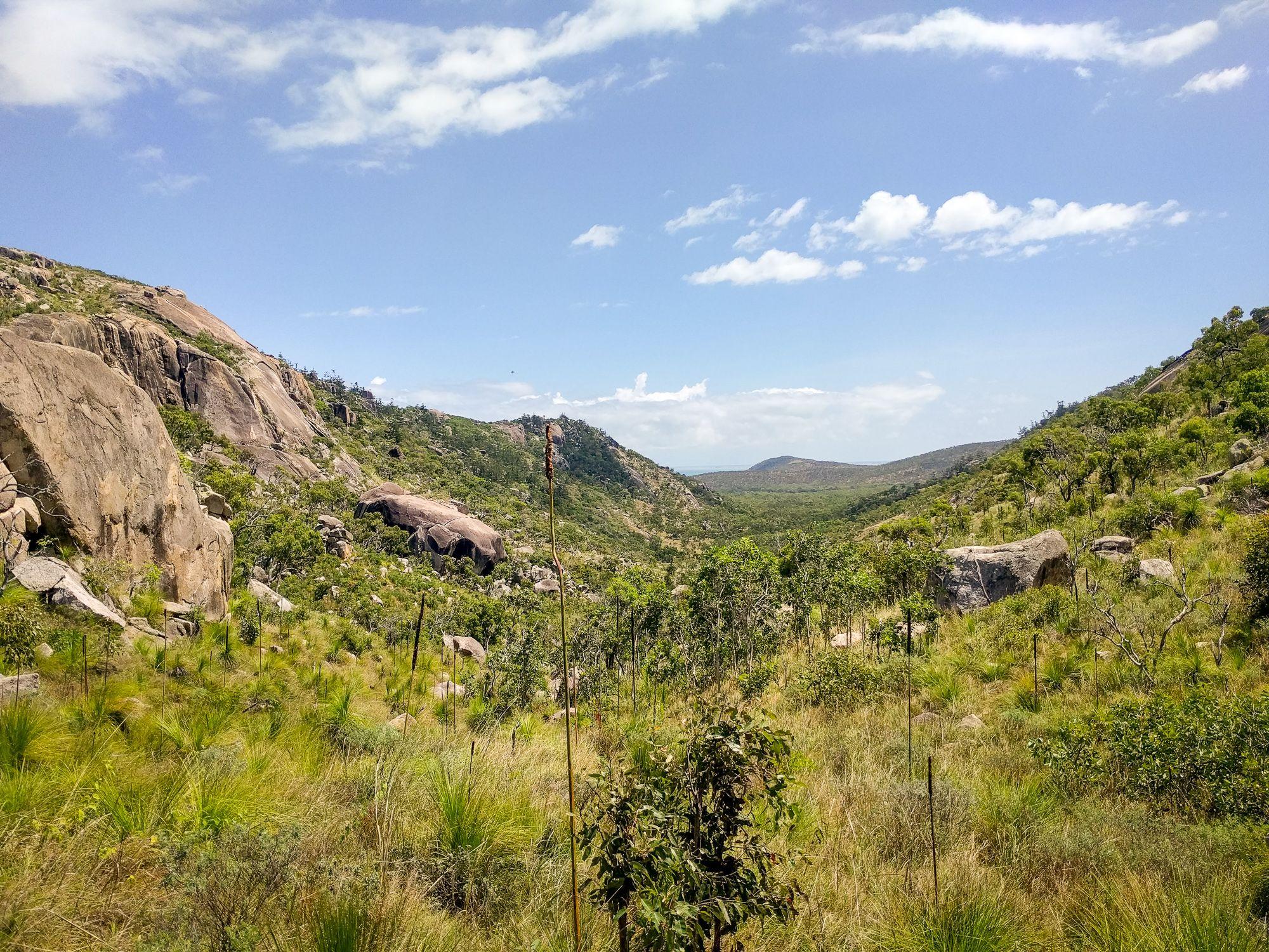 bushwalk cape cleveland