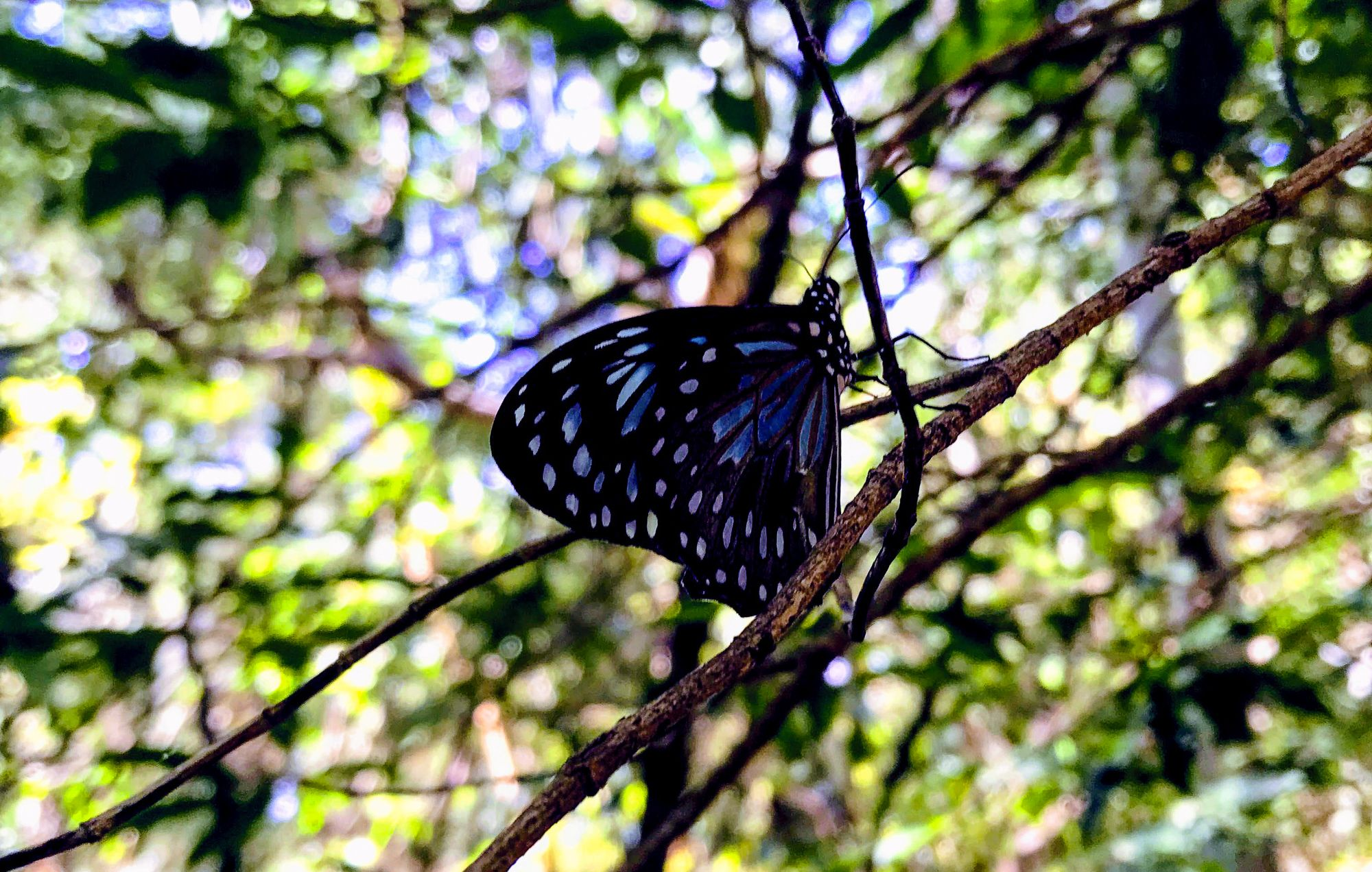Butterfly Forest Walk, Magnetic Island