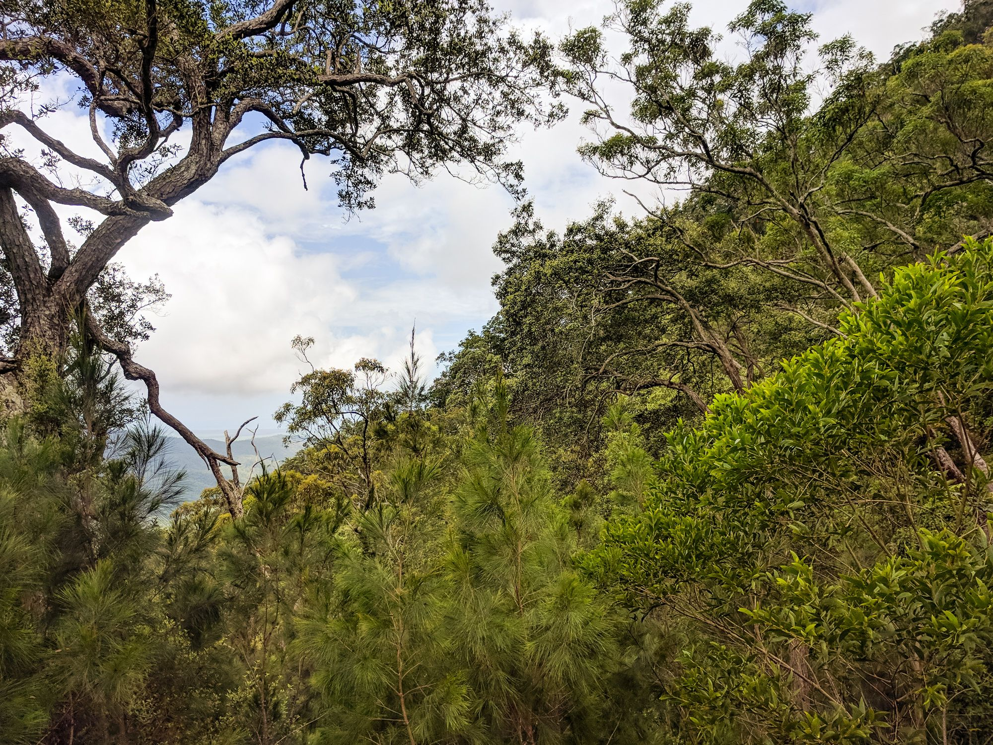 Steep ridgeline of Circle View Mountain, Paluma Range National Park