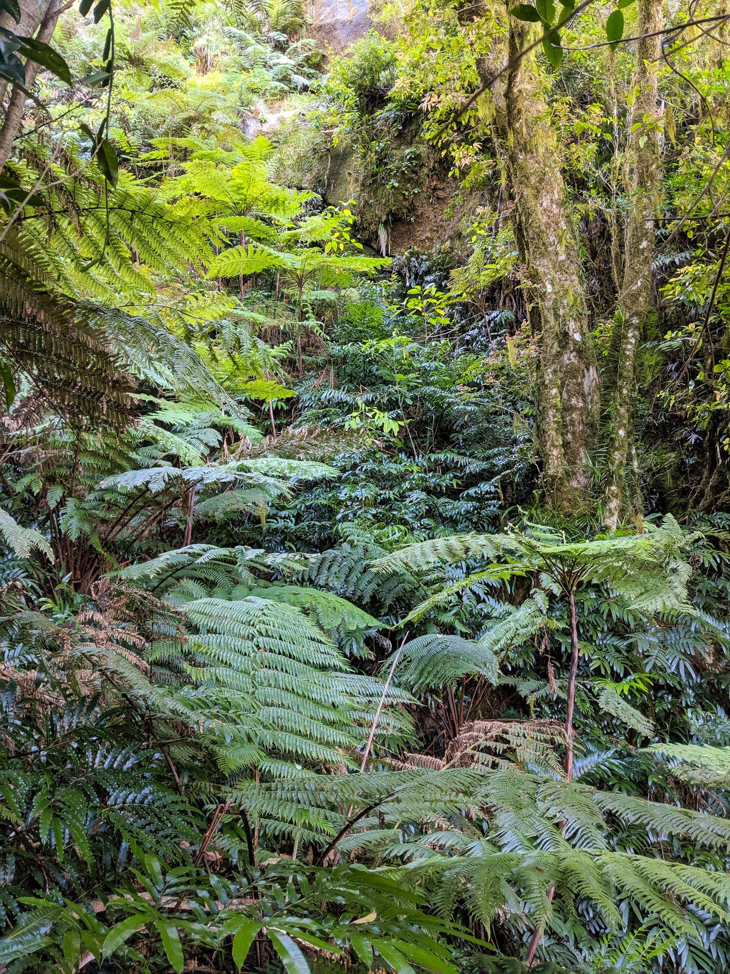 thumb creek route