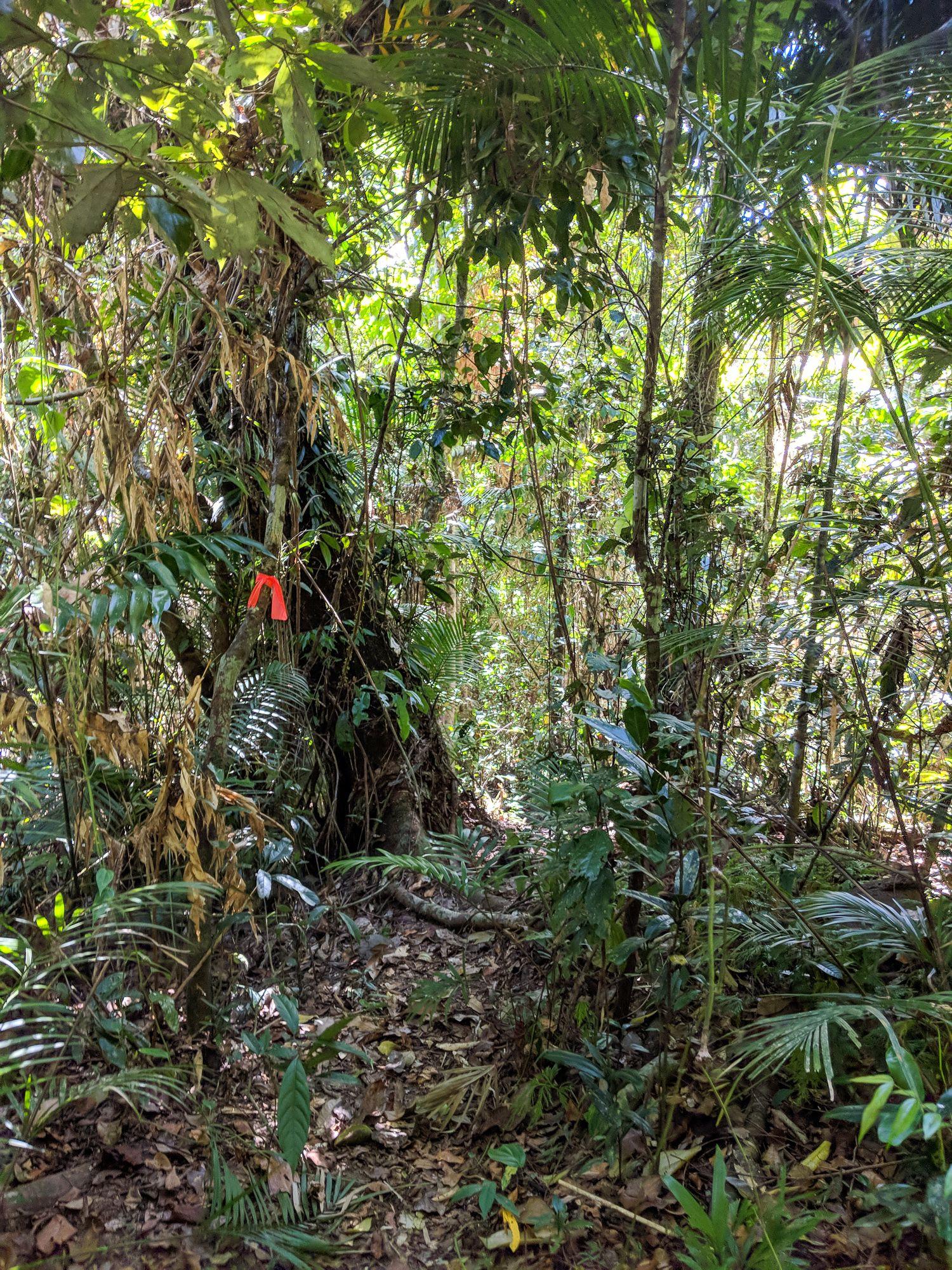Babinda Falls Track