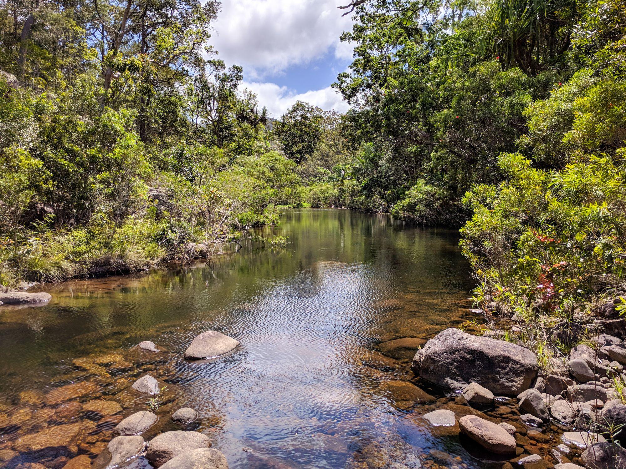 bluegum creek