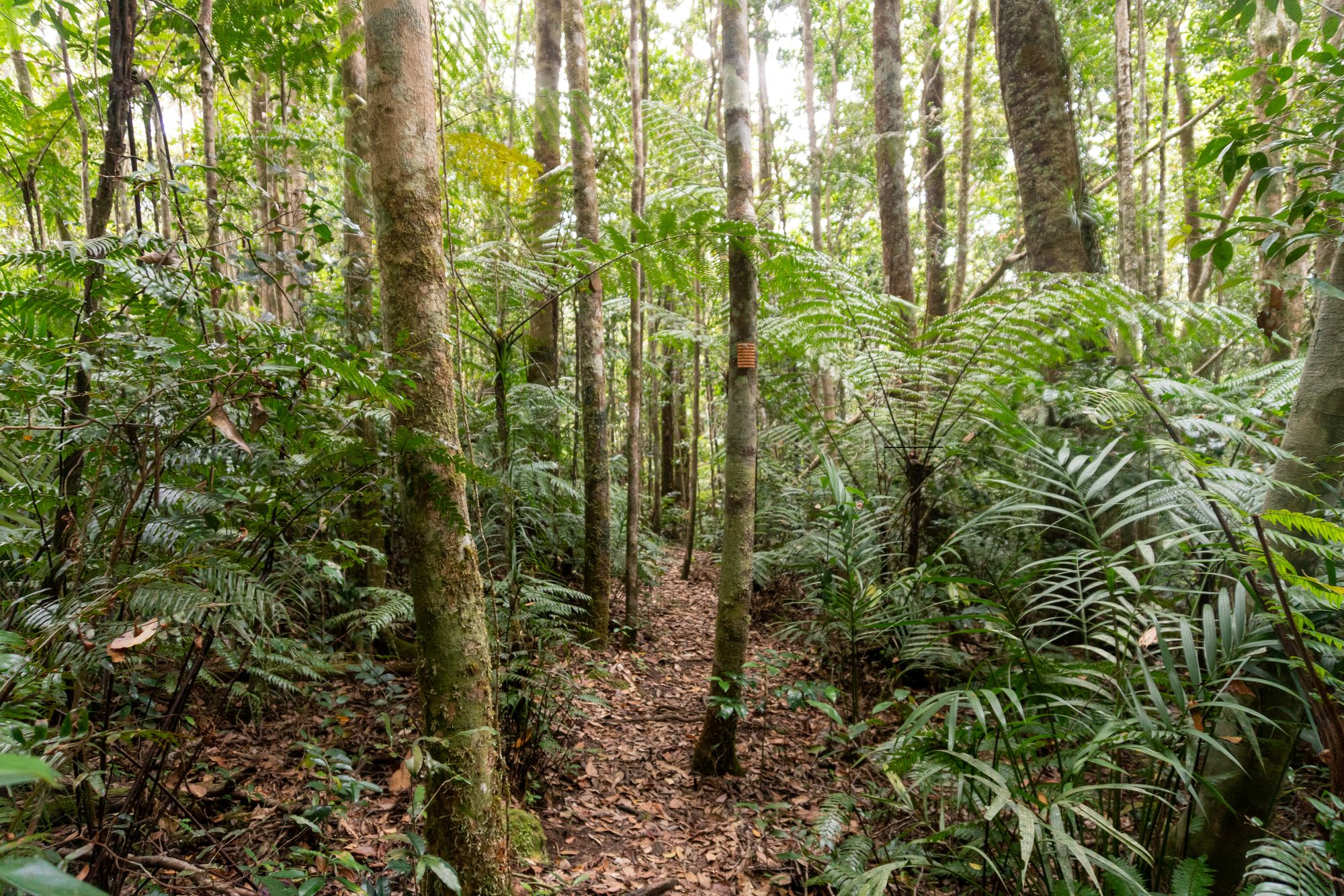 Paluma Range National Park trails