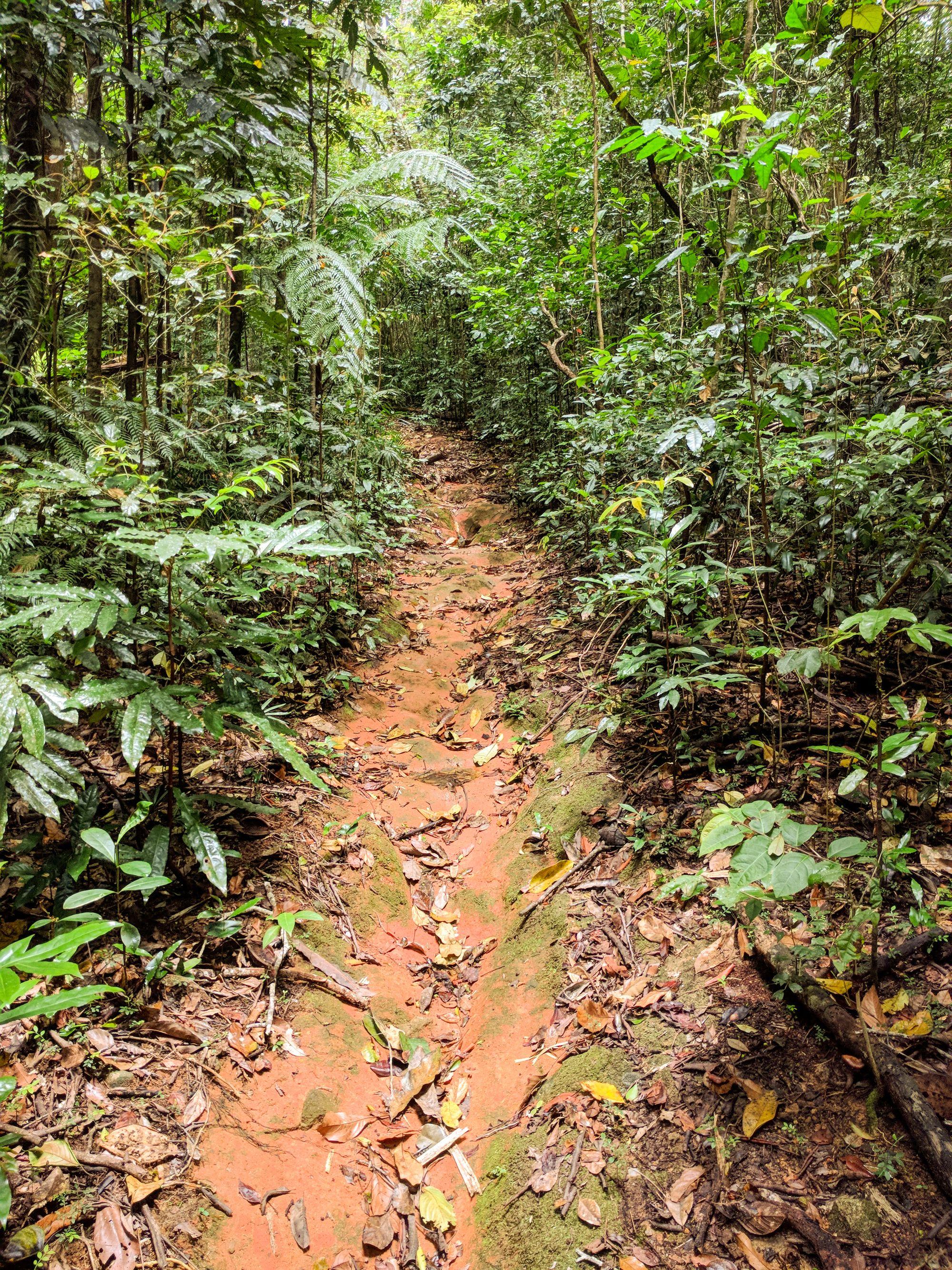 prb track logging road paluma