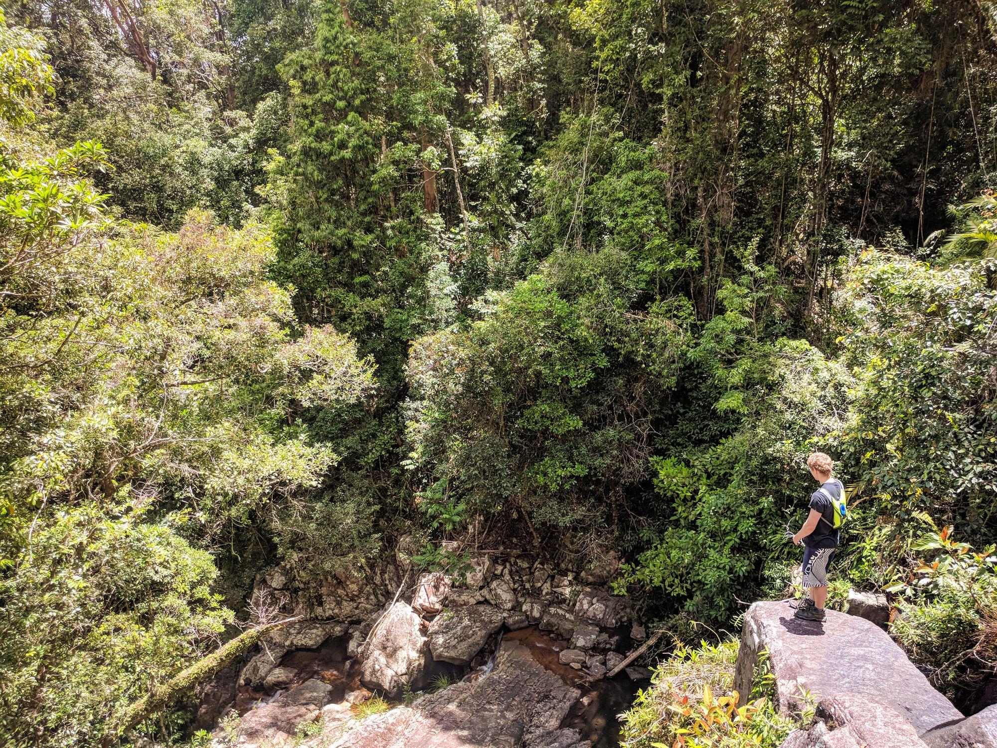 triple falls bluegum paluma