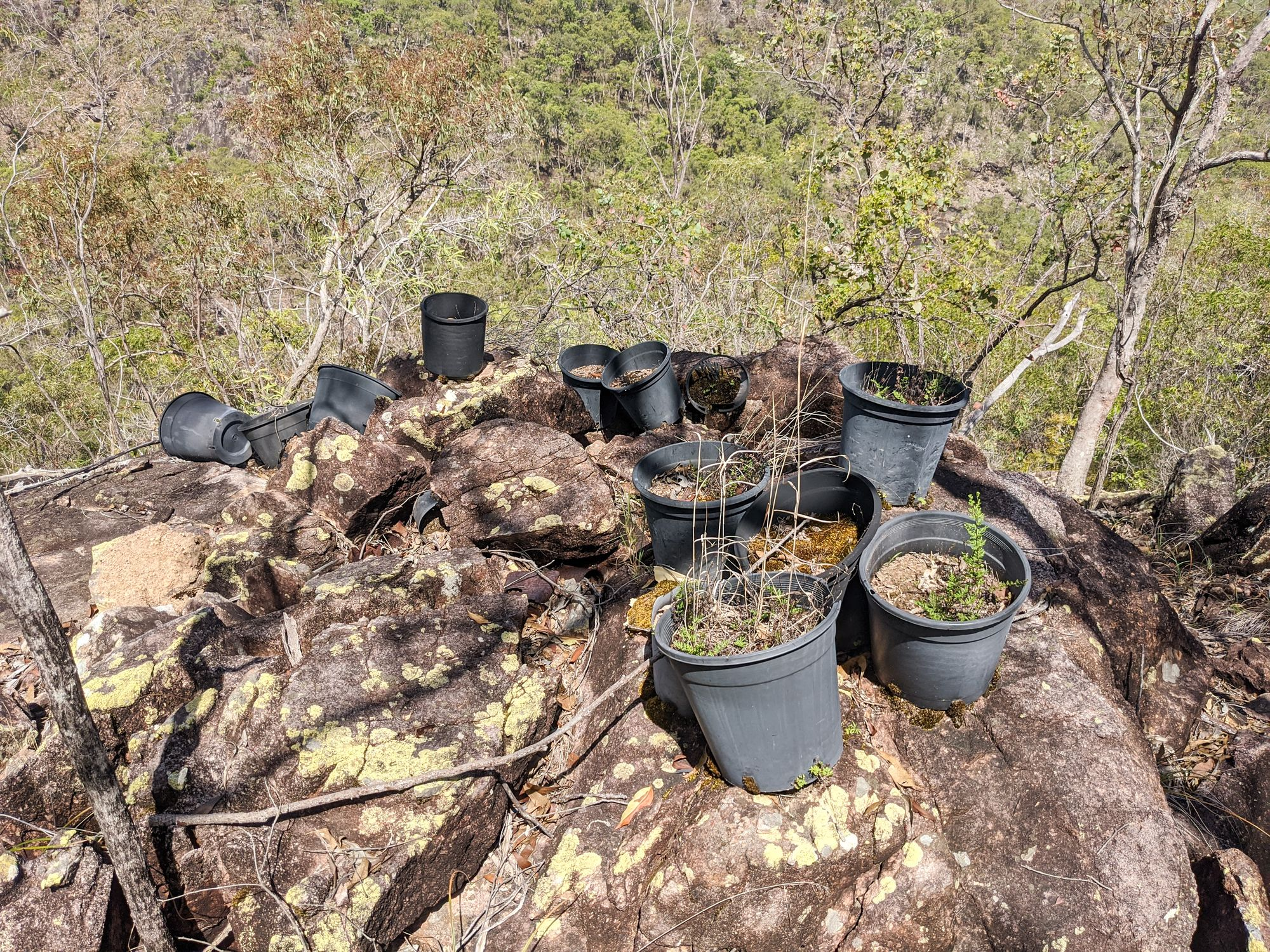 pot plants work camp paluma