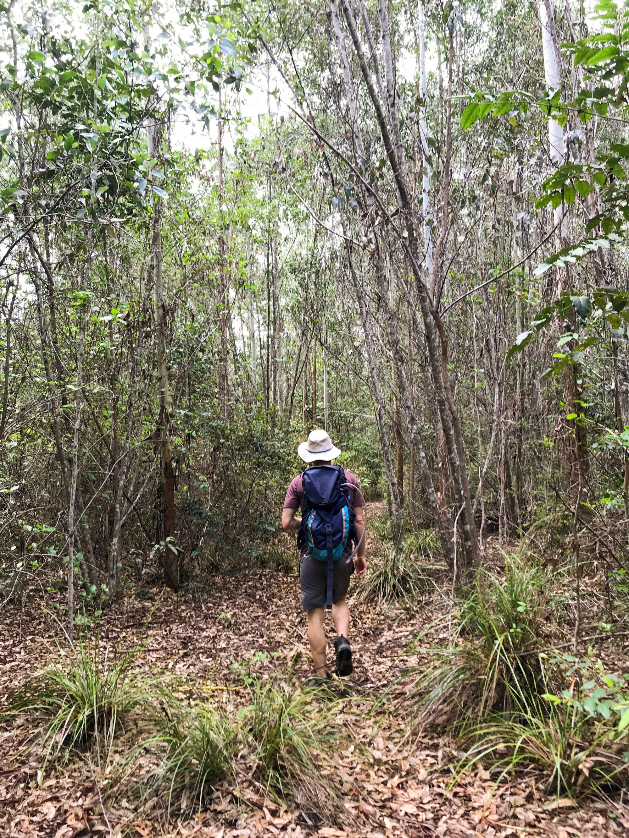 Paluma State Forest Hike