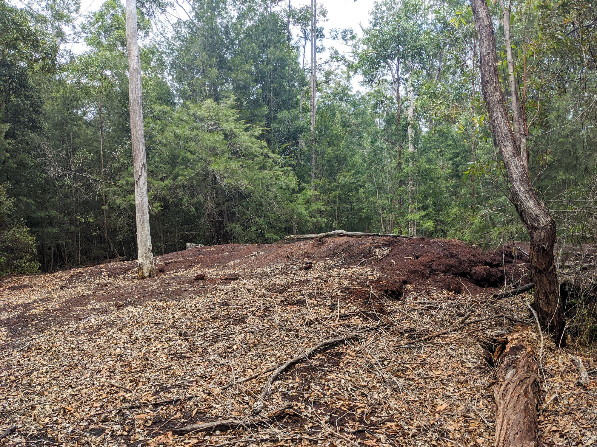 Paluma sawdust pile