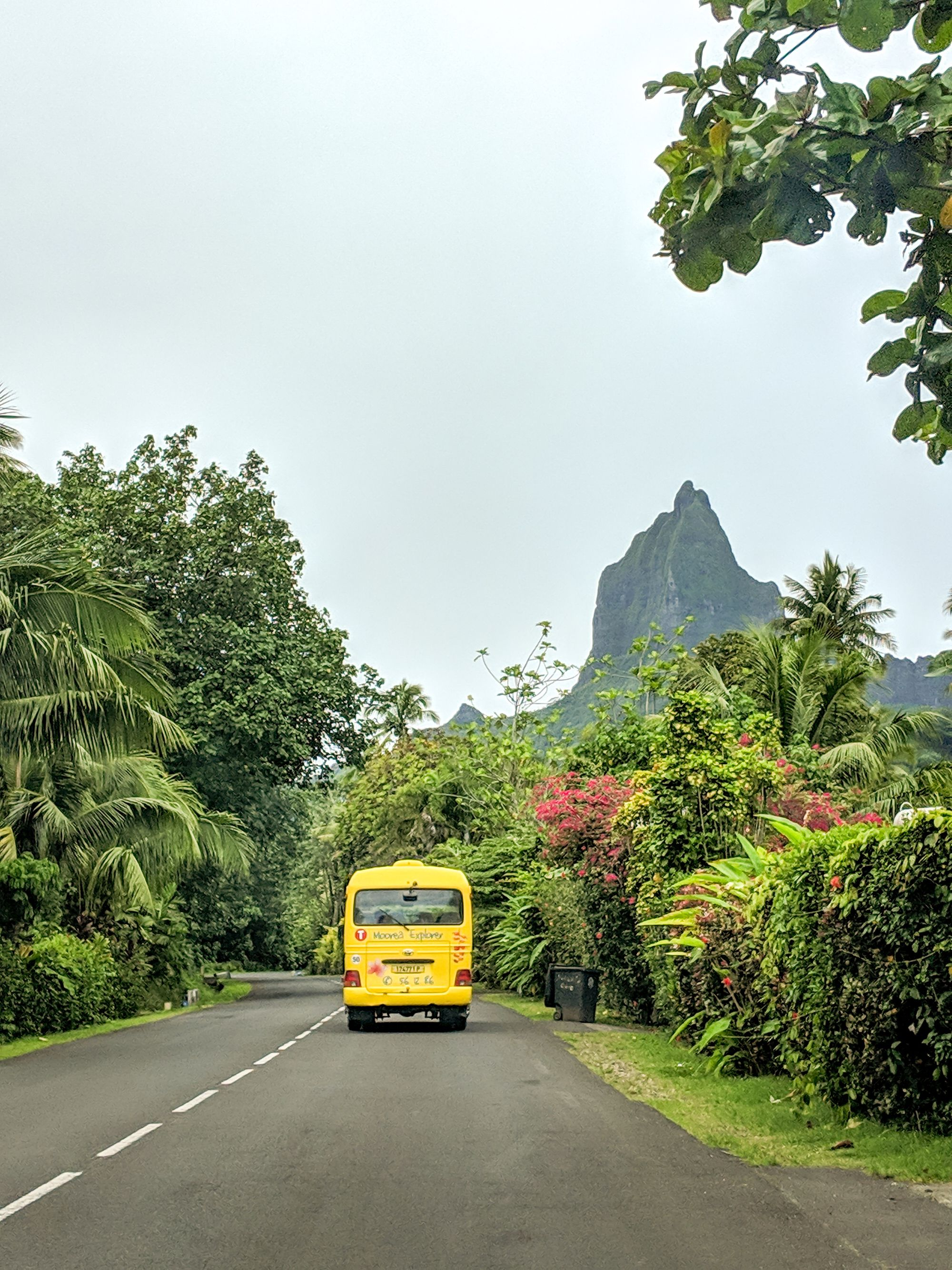 bus sharks tooth moorea french polynesia