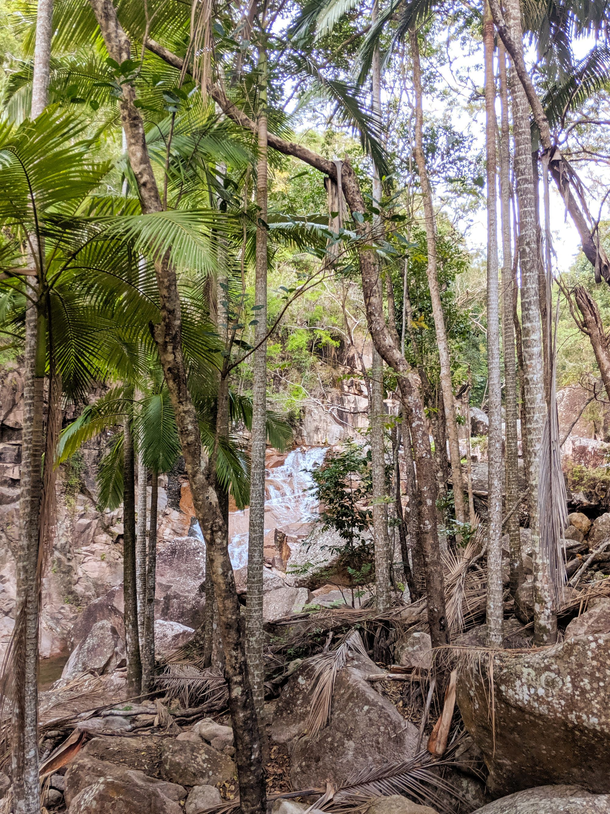 cockatoo creek palm trees