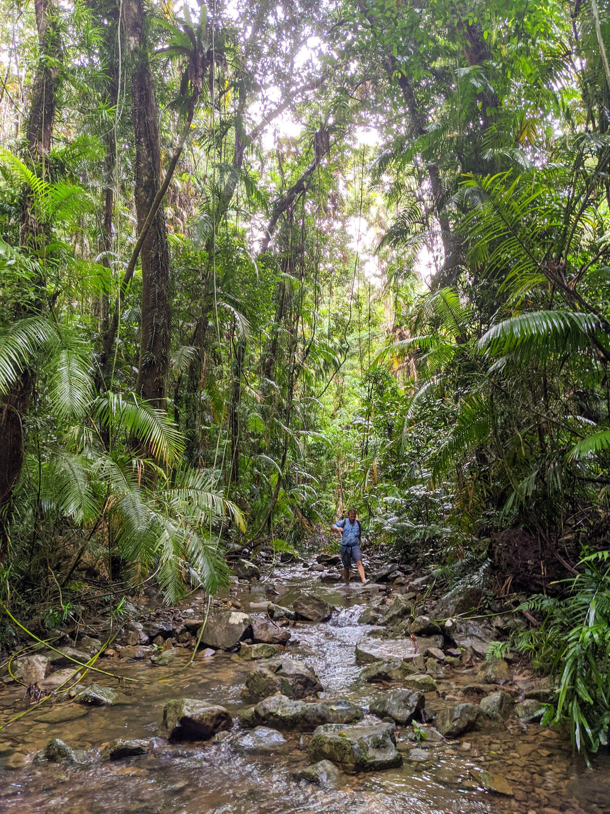 creek rainforest paluma