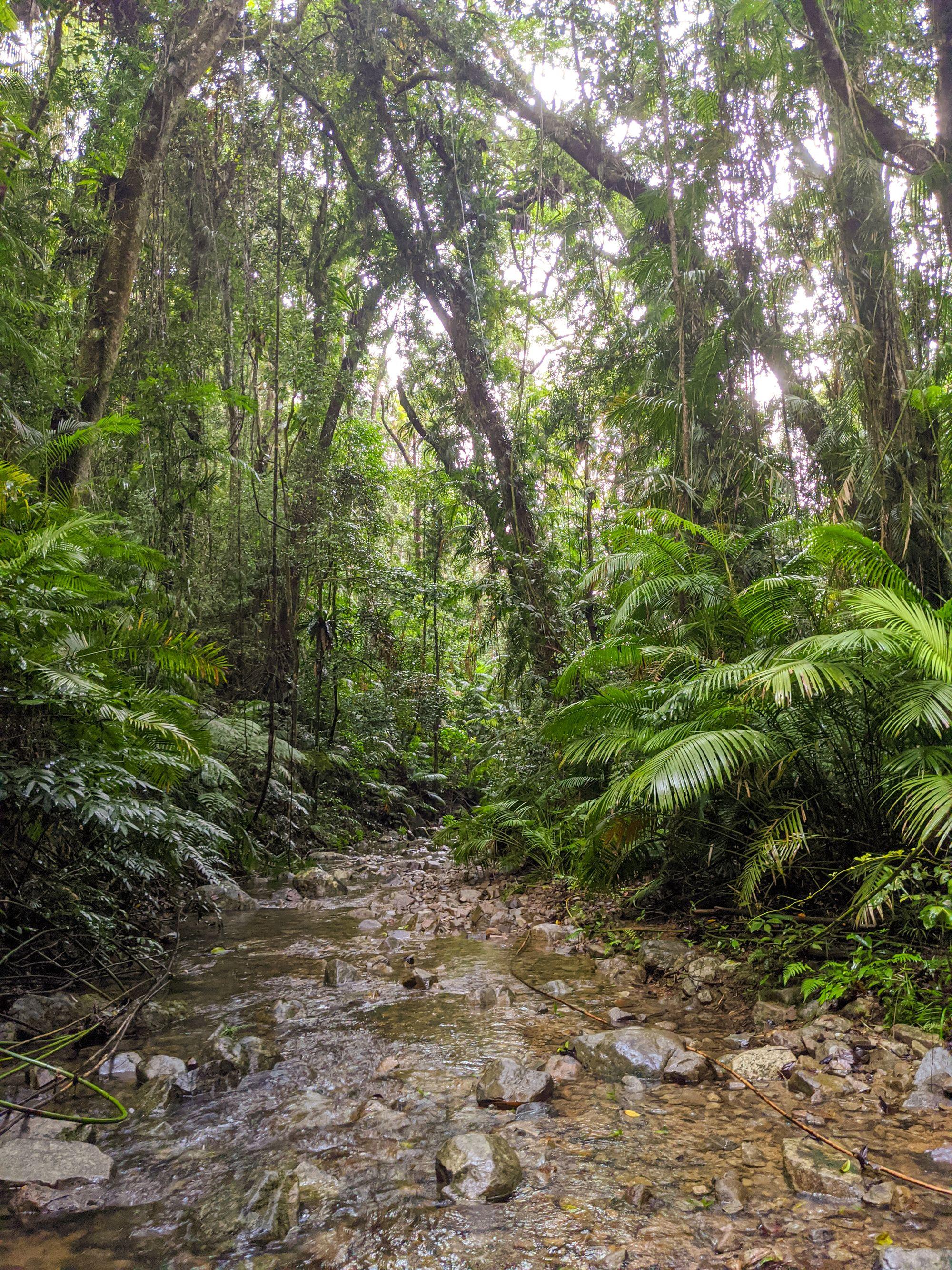 lush rainforest stream