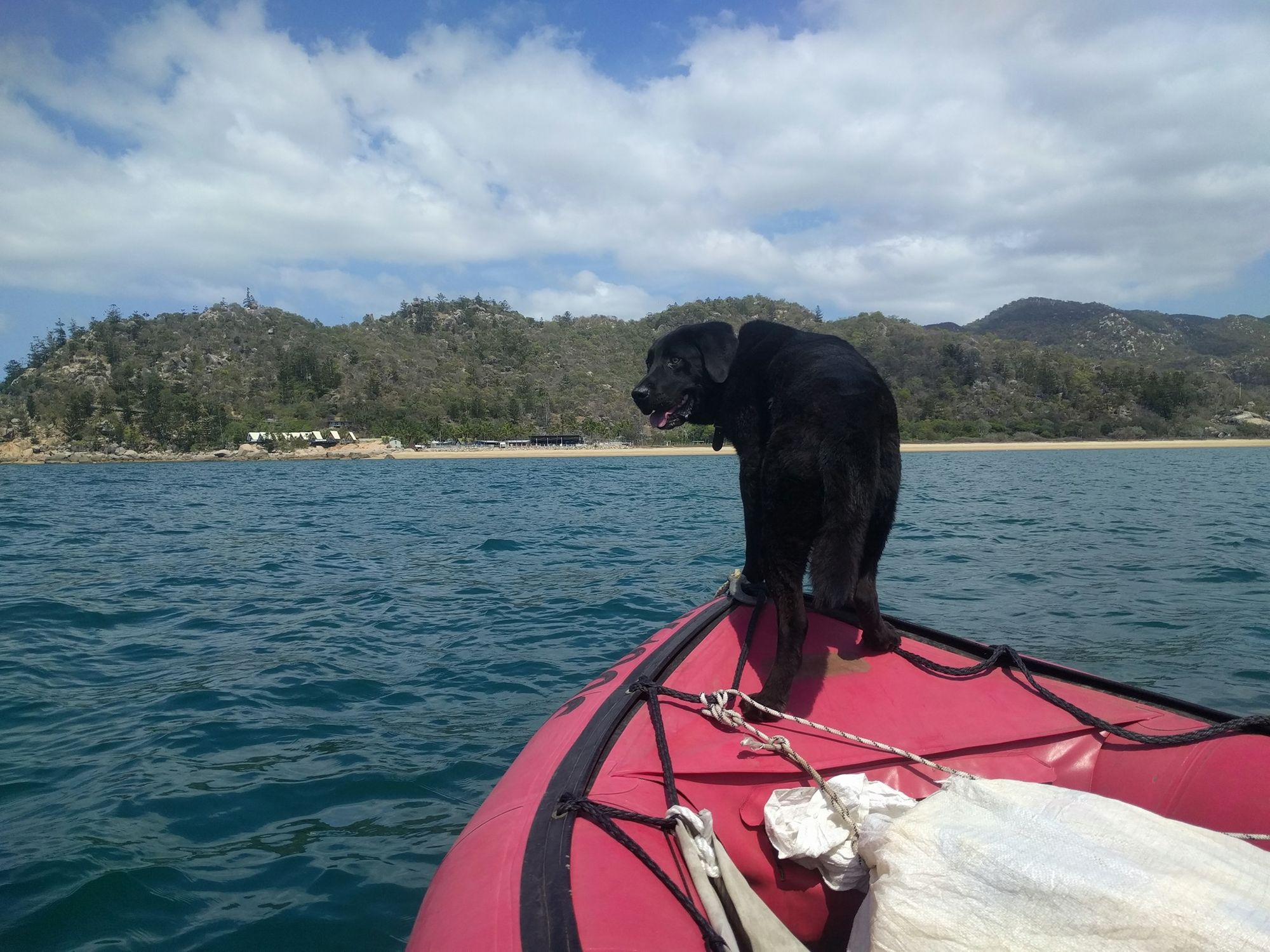 magnetic island dog in boat