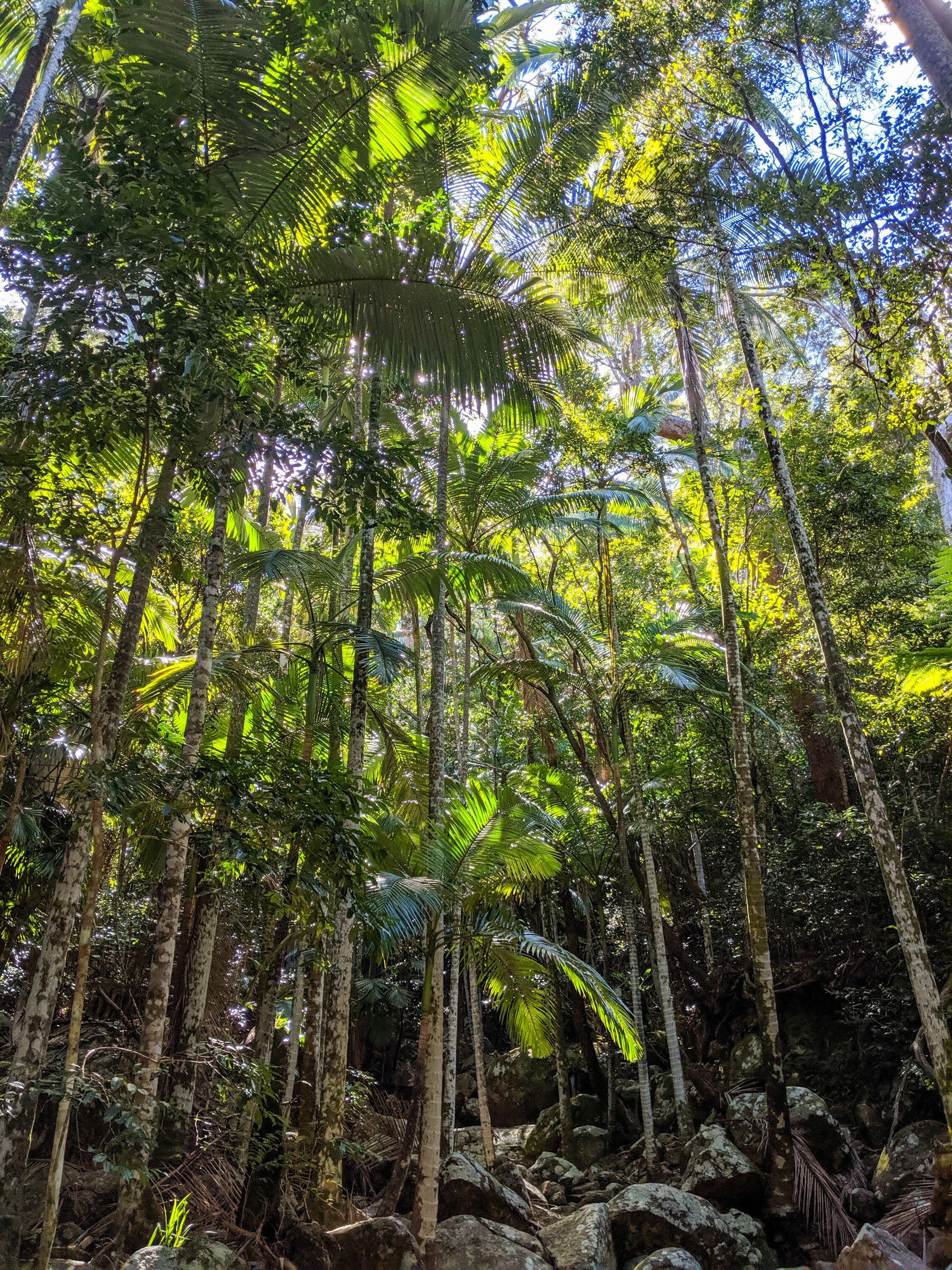 major creek plam trees