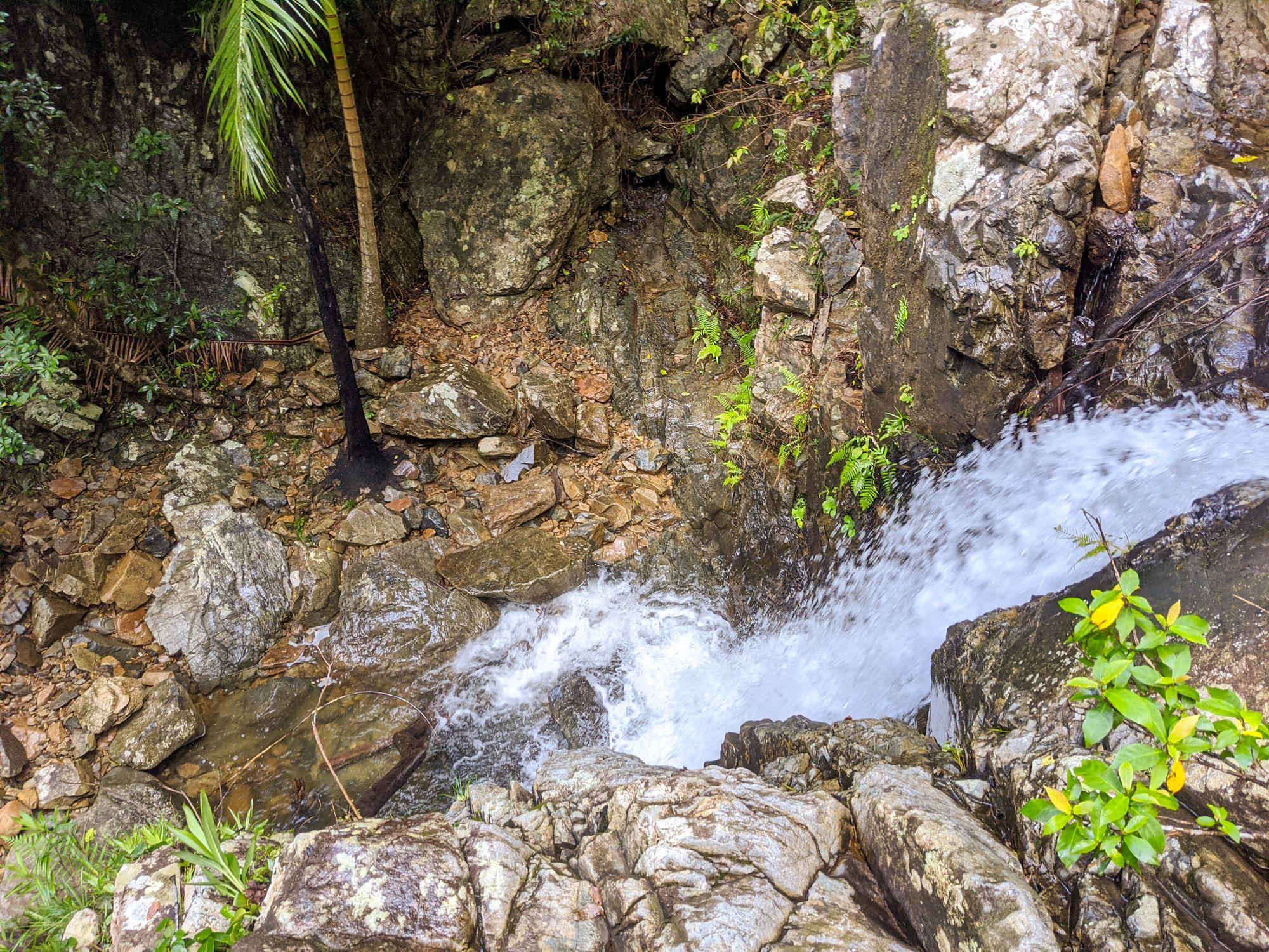 mobile creek falls palm tree