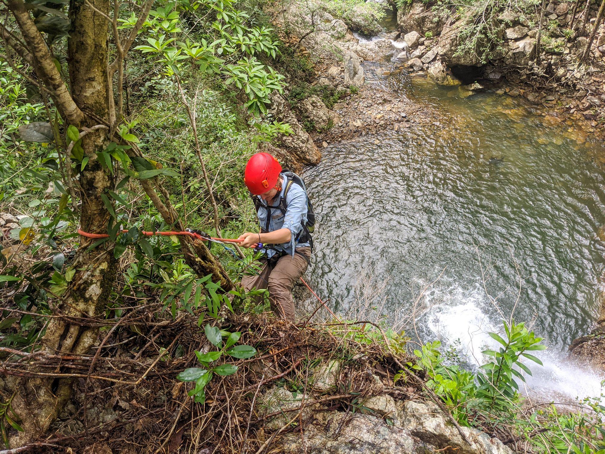 mobile creek rappel 20m tree 2