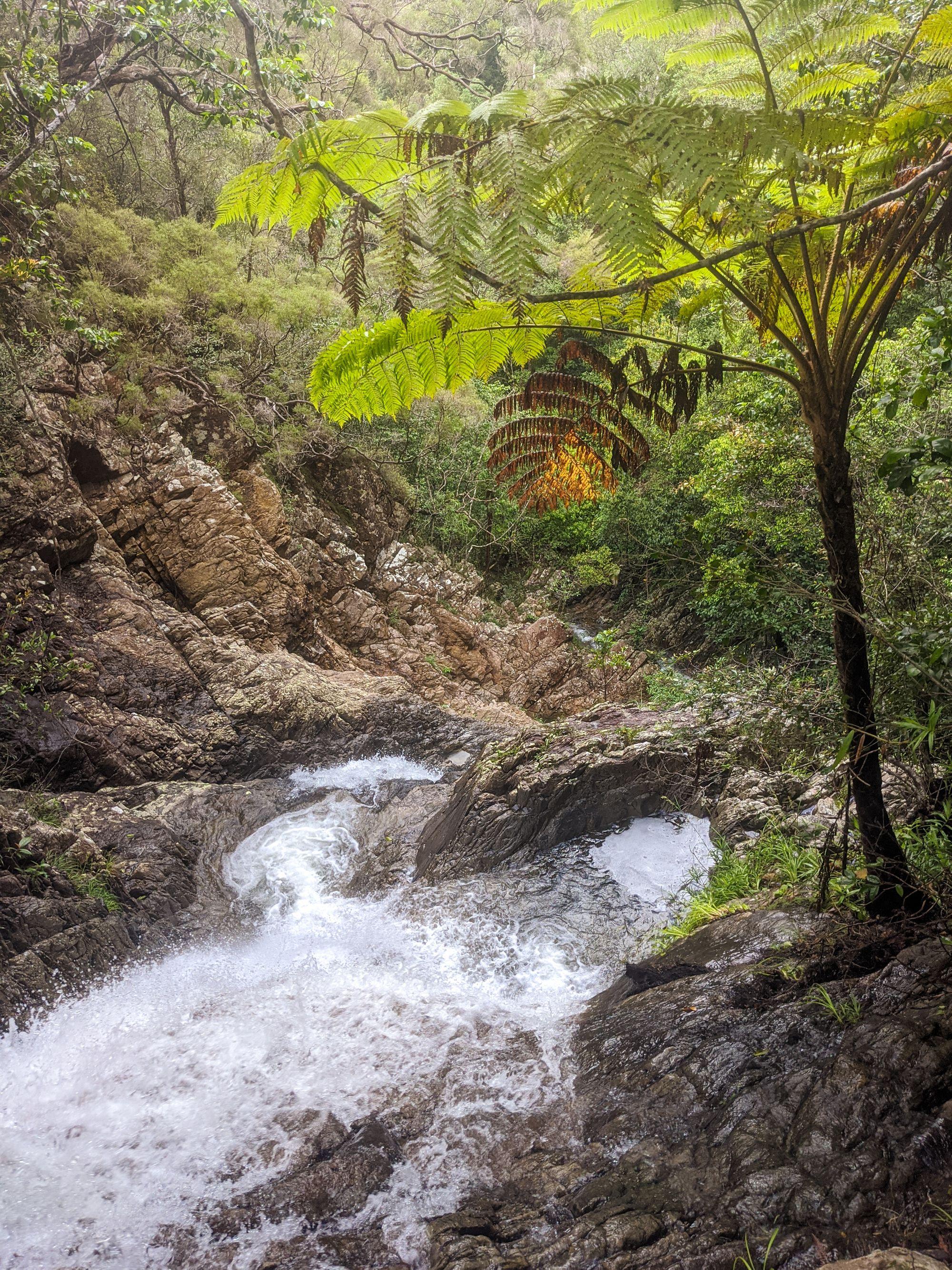 mobile creek tree fern