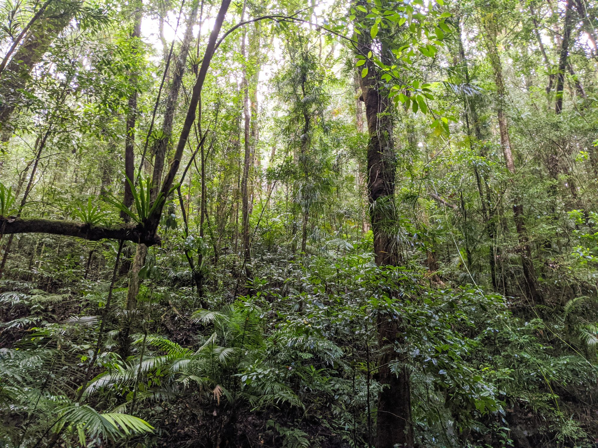 paluma range rainforest