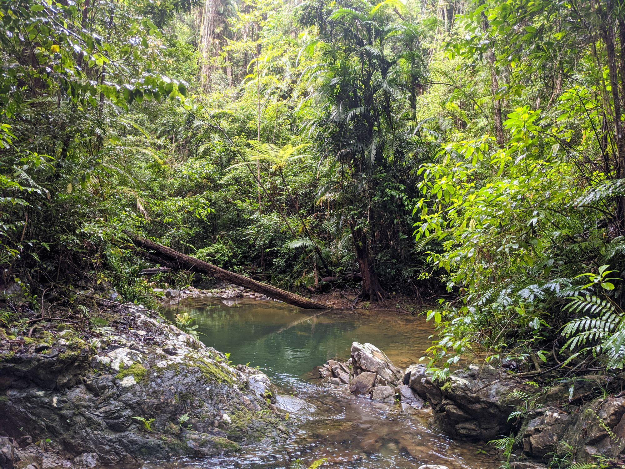 rainforest creek paluma