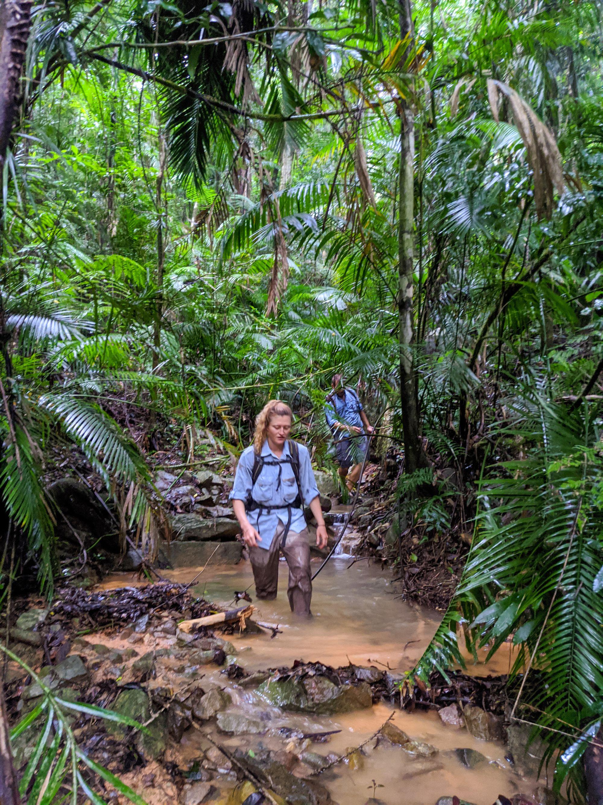 rainforest stream paluma 2