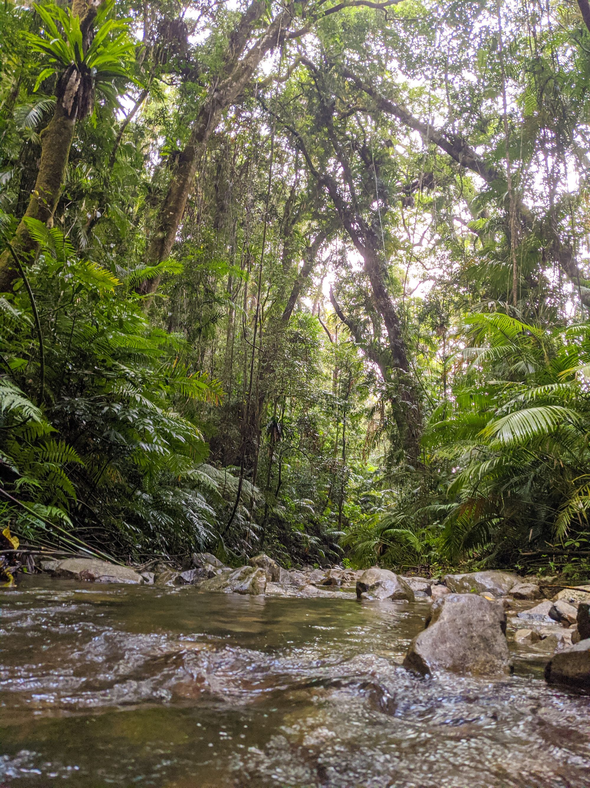 rainforest stream paluma range