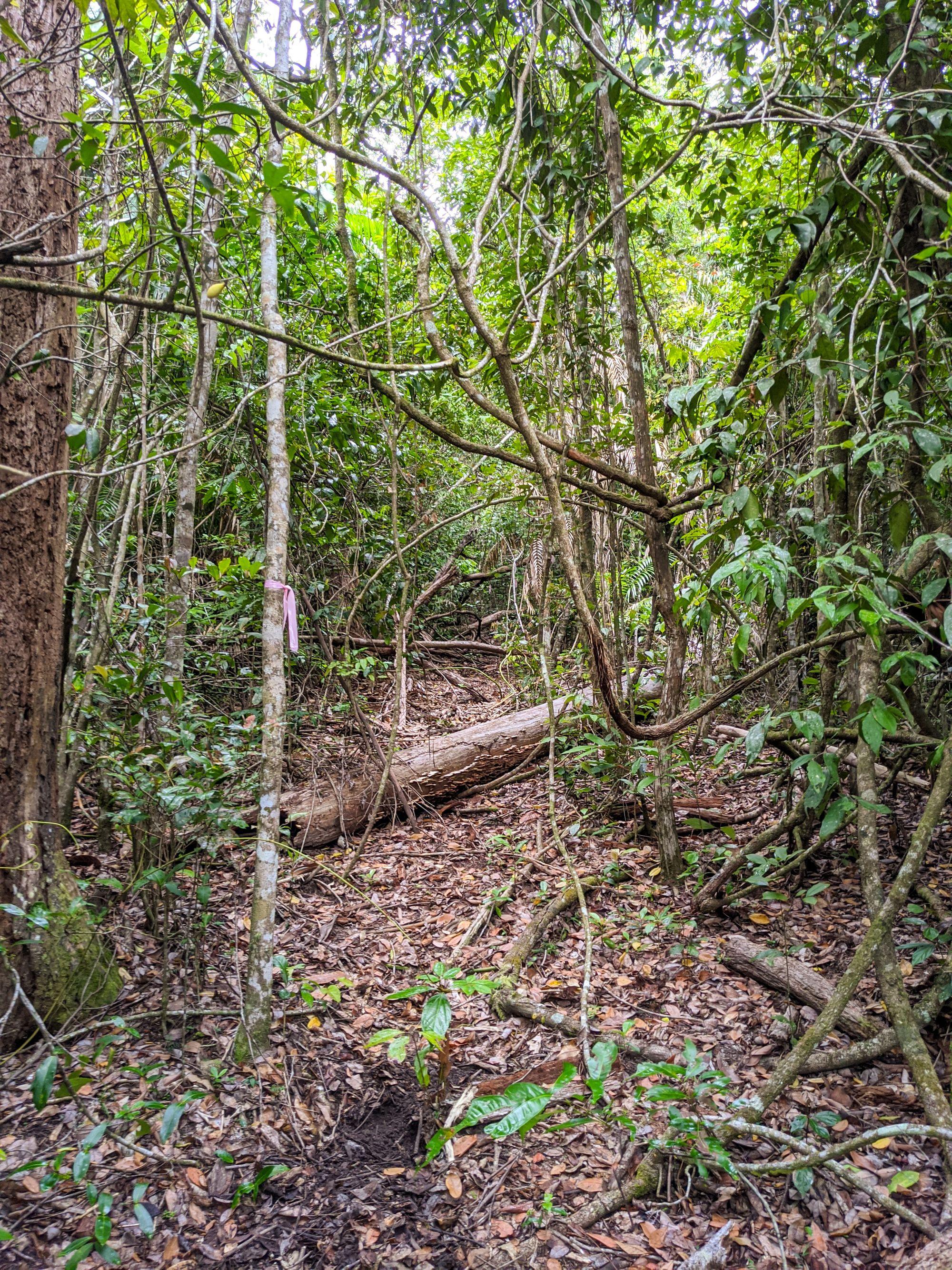 raspberry falls trail