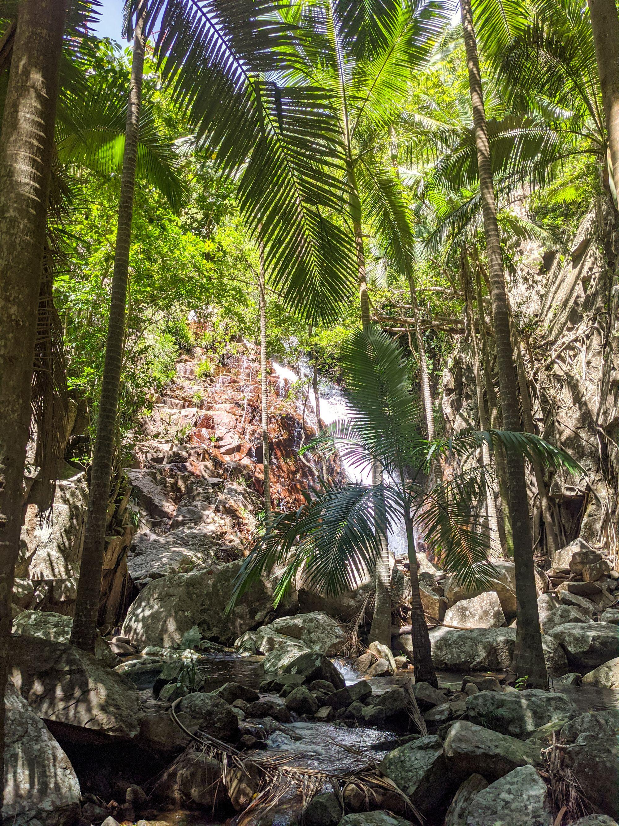 first waterfall cascades plam trees