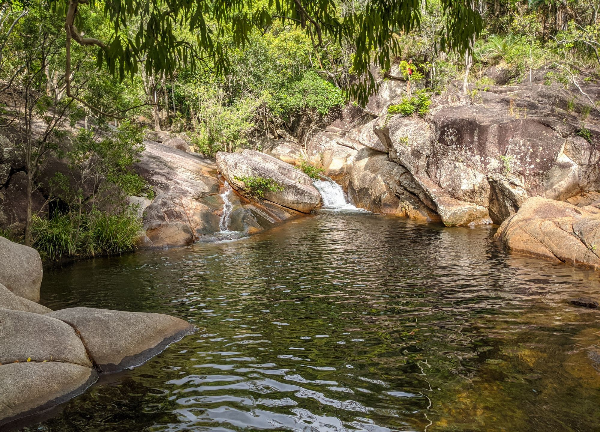 princess pools palm creek st margaret
