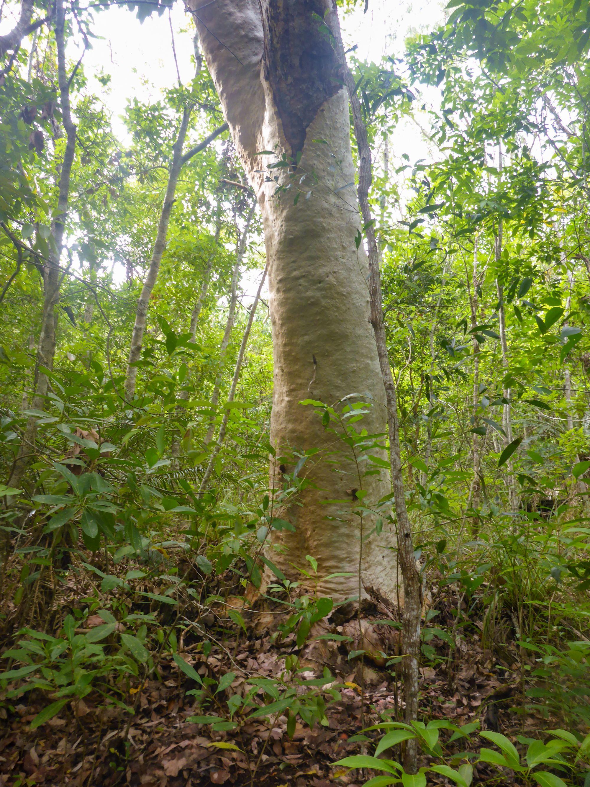 the white tree palm creek