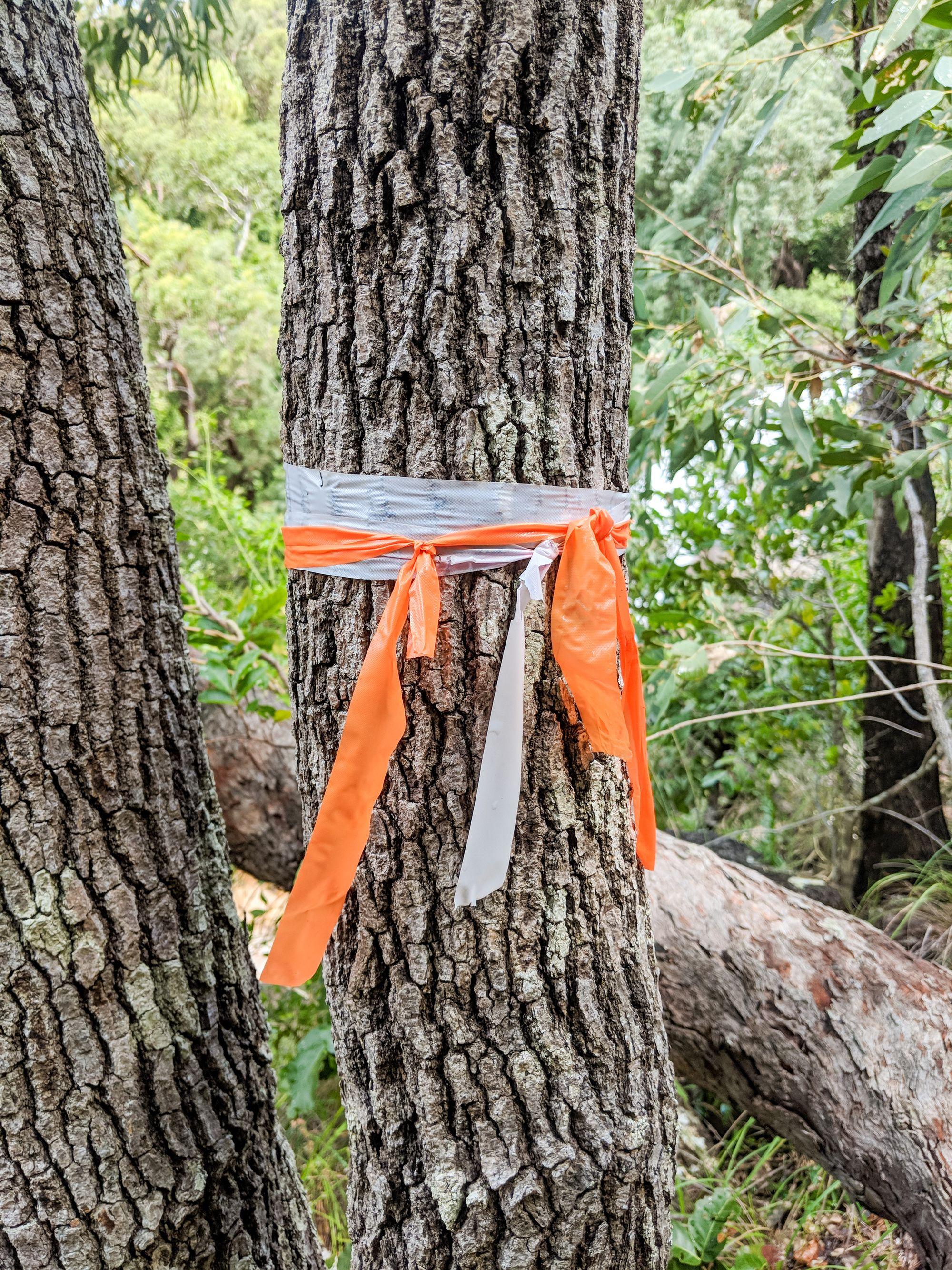 top of alligator falls track surveyors tape
